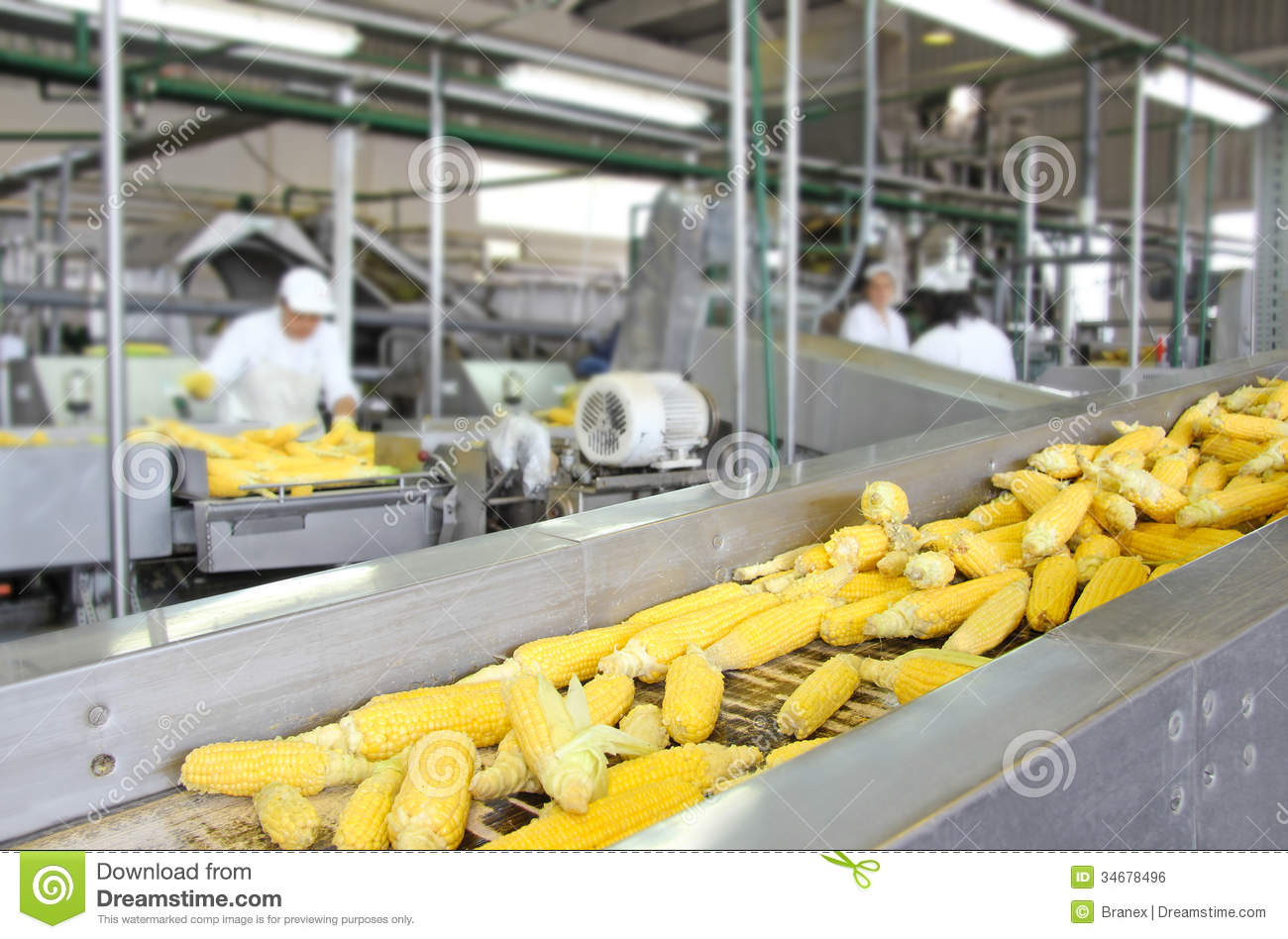 Download Corn production stock photo. Image of occupation, factory - 34678496