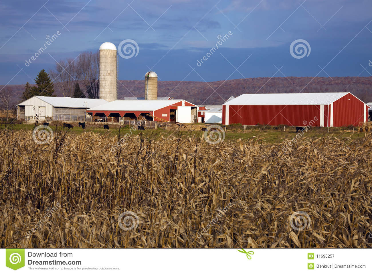 Corn and Red Farm Buildings