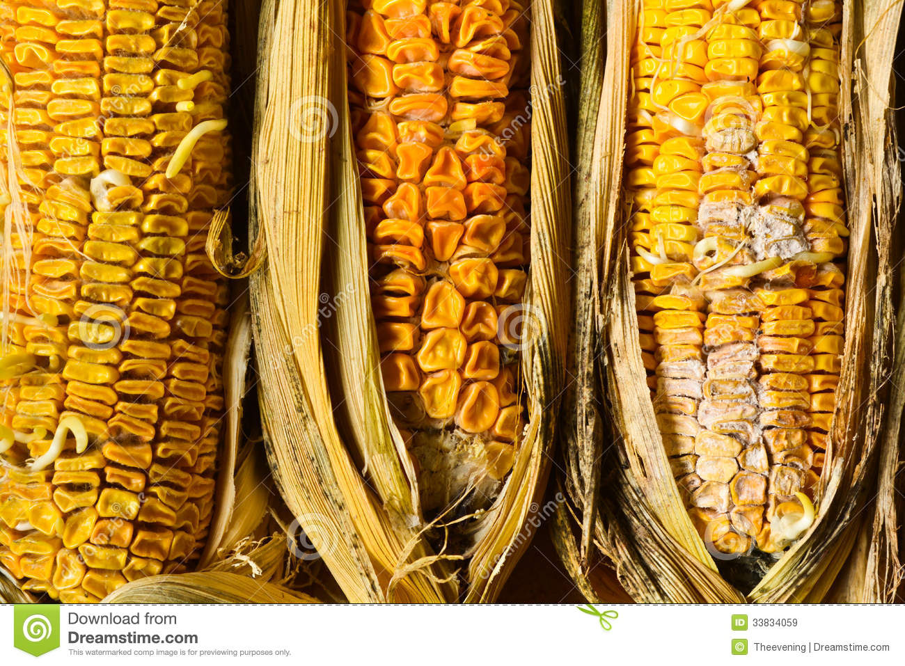 how to make rotten corn