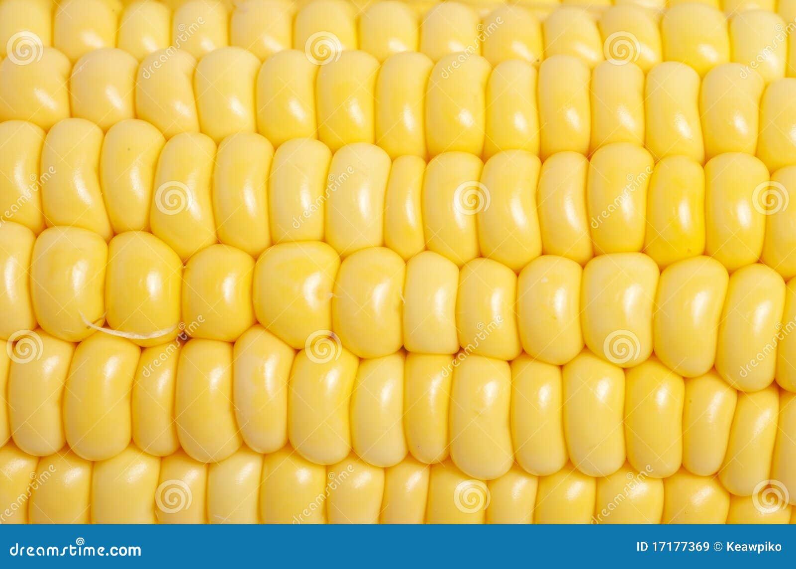 corn texture closeup royalty free stock images image ear of corn clip art images Corn Plant Clip Art