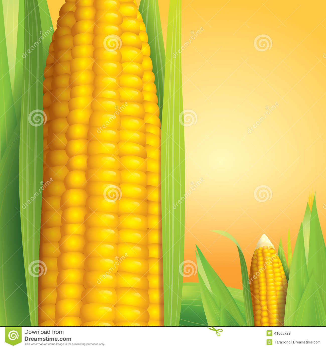 Book Cover Design Sites : Corn vector illustration on yellow background stock