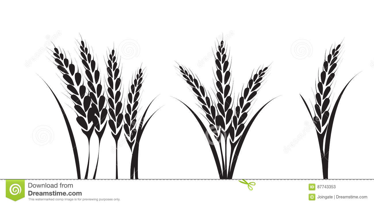 corn or wheat silhouette drawings stock vector illustration of rh dreamstime com wheat clip art free download what clip art do screen printers use