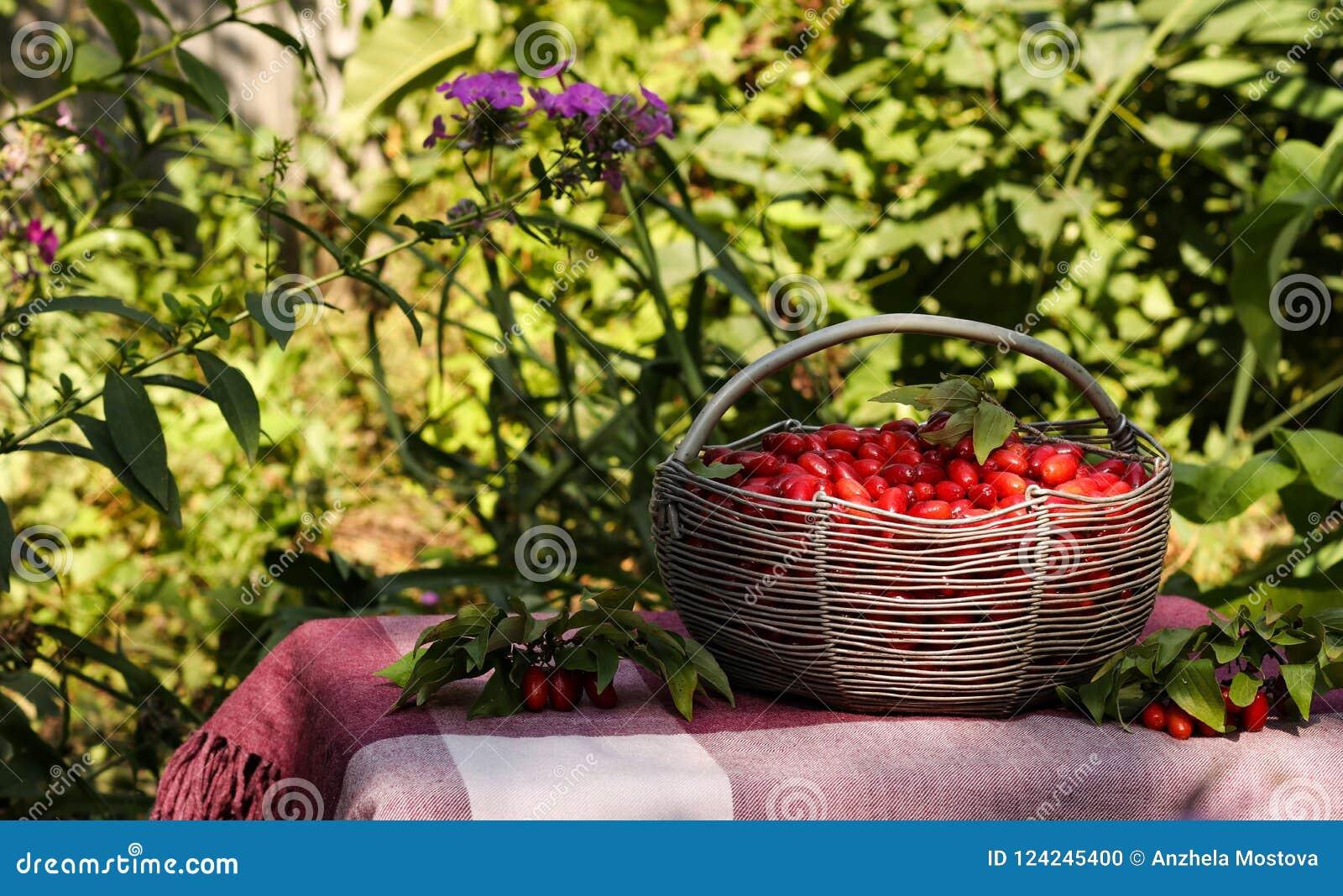 Cornejo maduro en una cesta del hierro en una tabla en el jardín