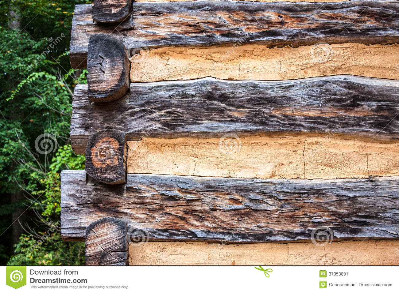 Exterior of corner detail on log cabin showing logs and chinking.
