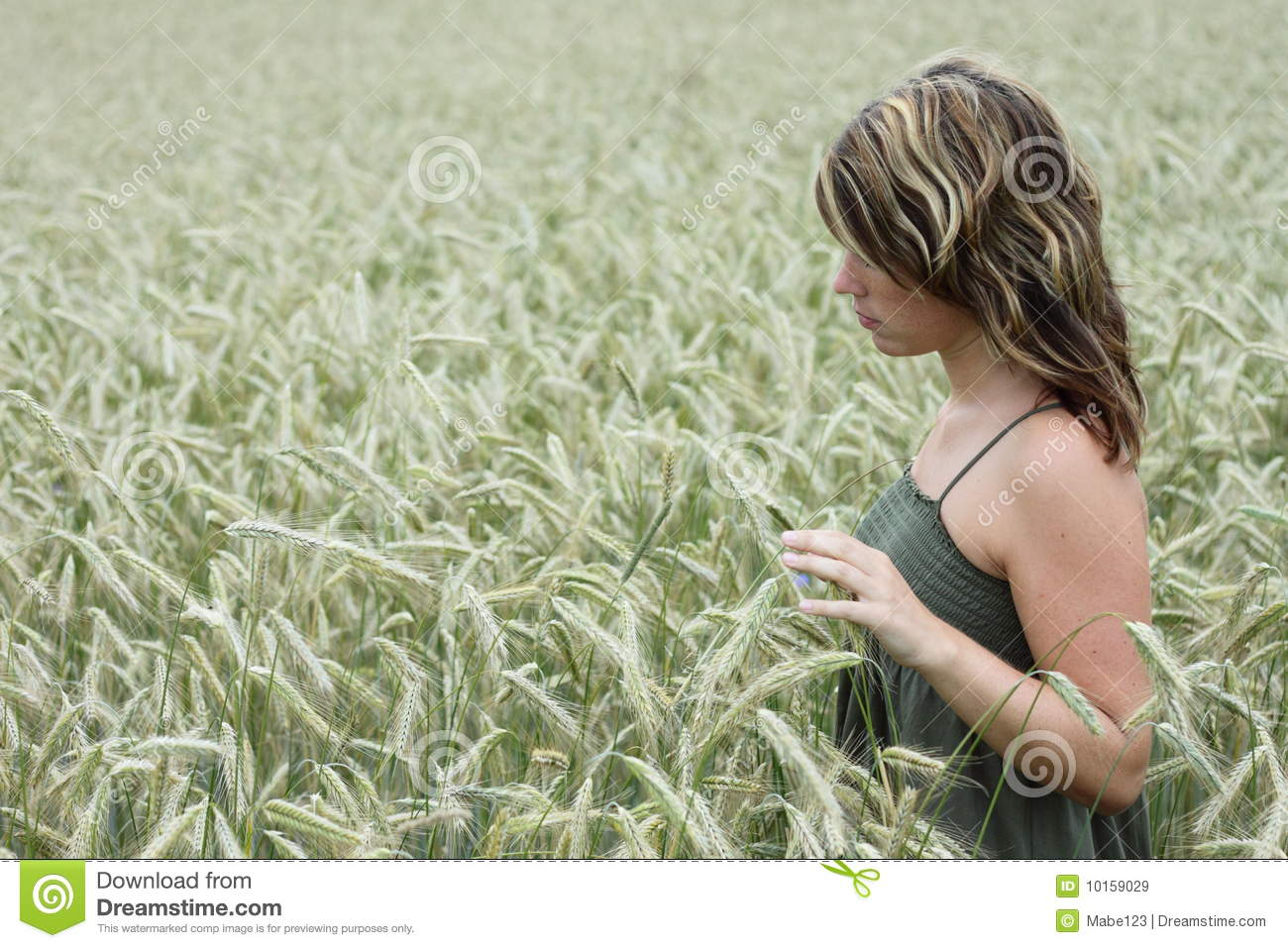 Cornfield Royalty Free Stock Images - Image: 10159029