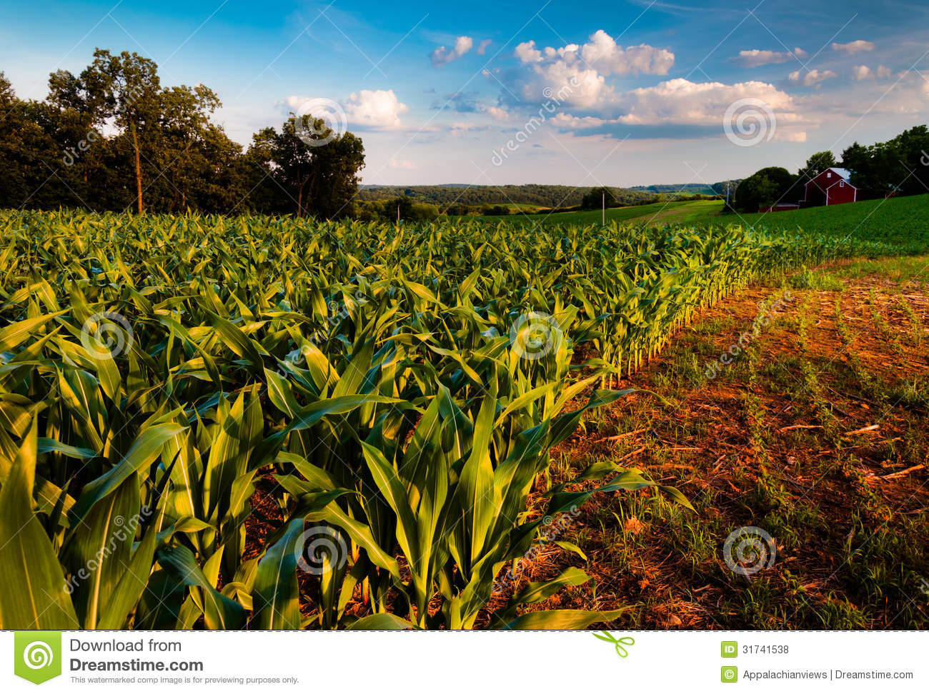 Cornfield And Barn On A Farm Field In Rural Countryside ...
