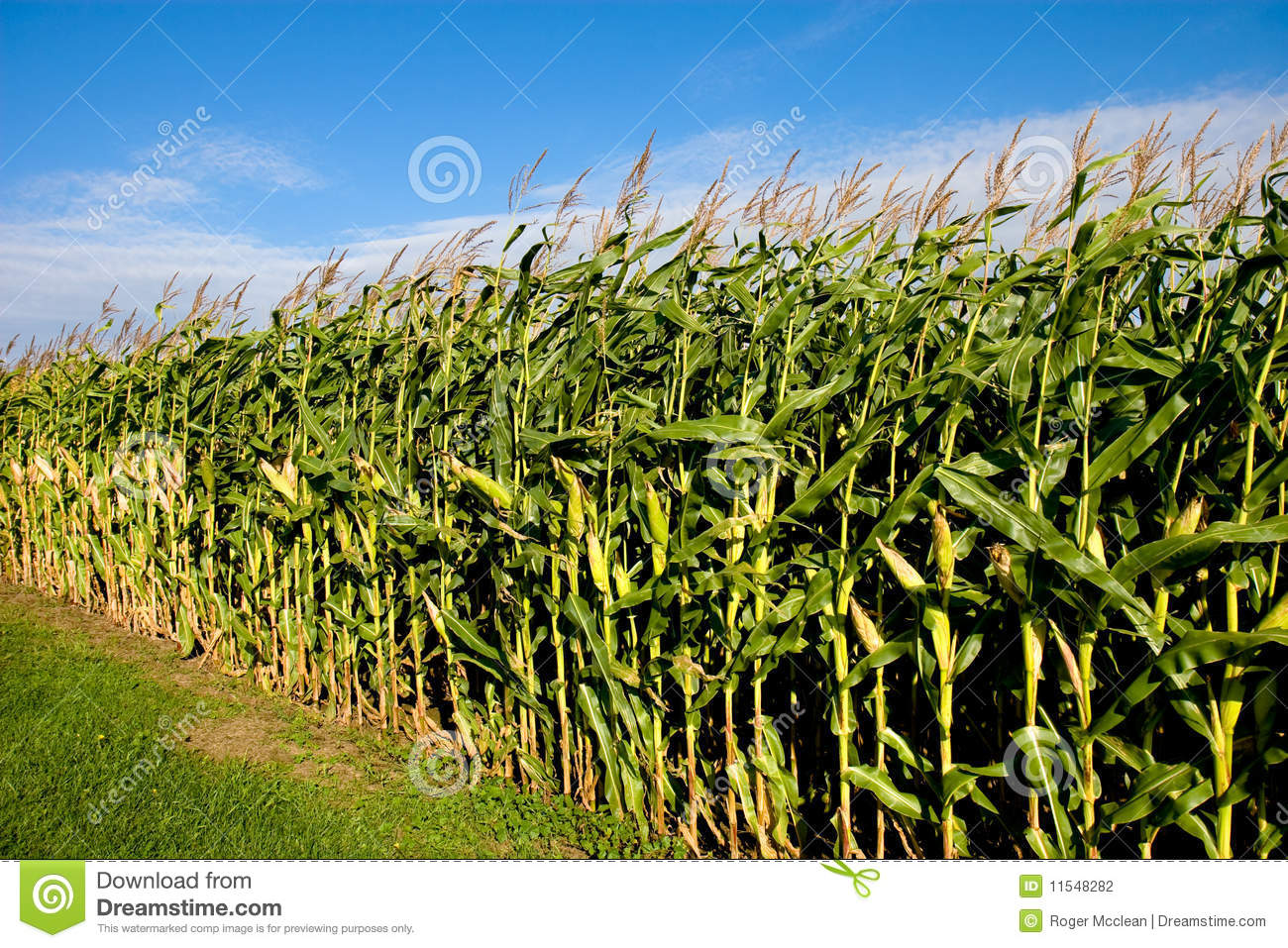 Cornfield And Sky Stock Photography - Image: 11548282