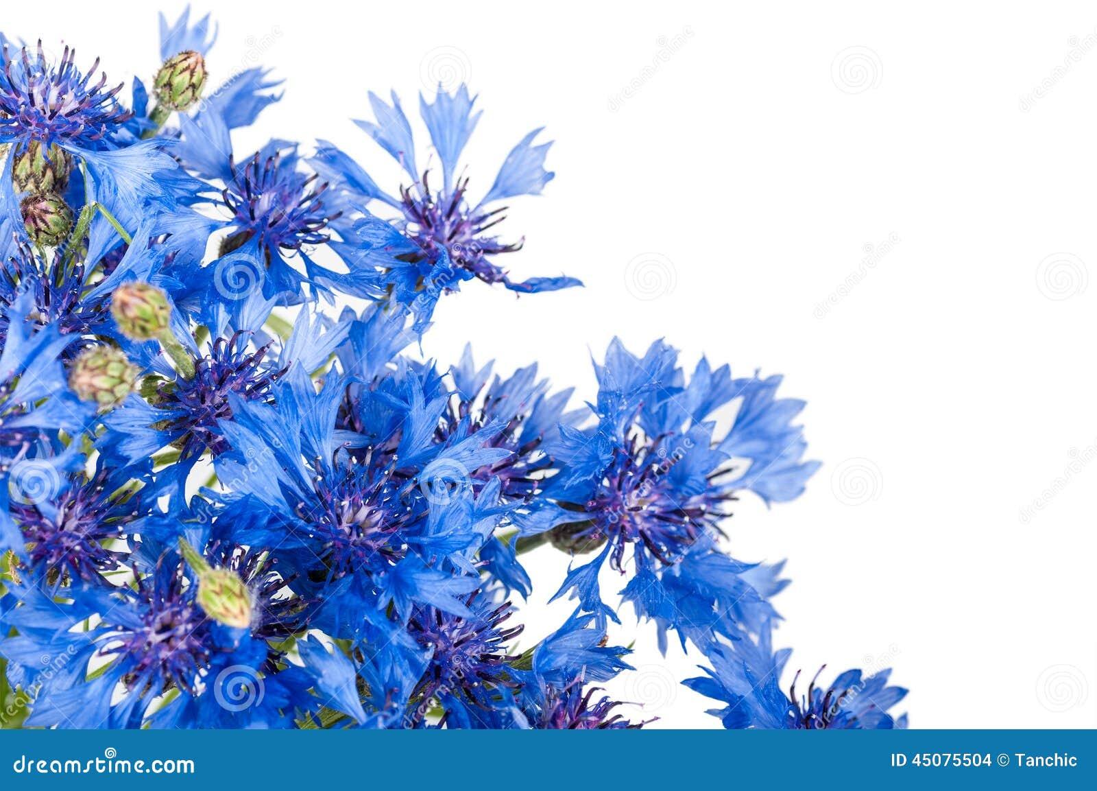 Cornflower Boeket van wilde blauwe bloemen