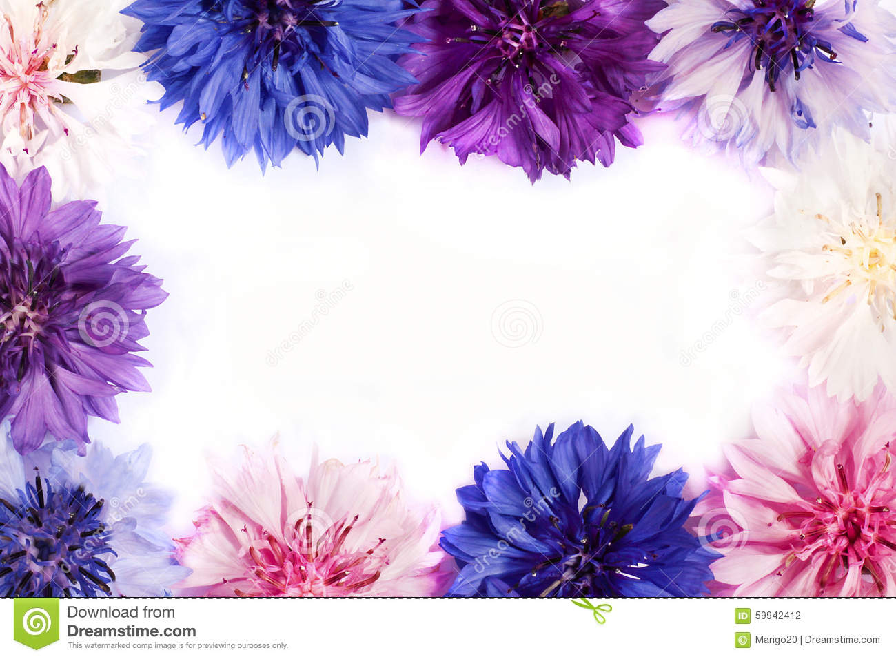 Cornflowers stock photo image 59942412 for What makes flowers different colors