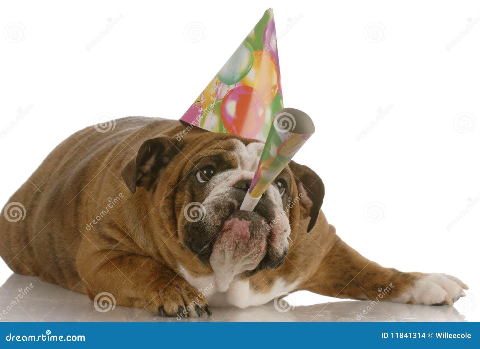 Corno di salto del cane di compleanno