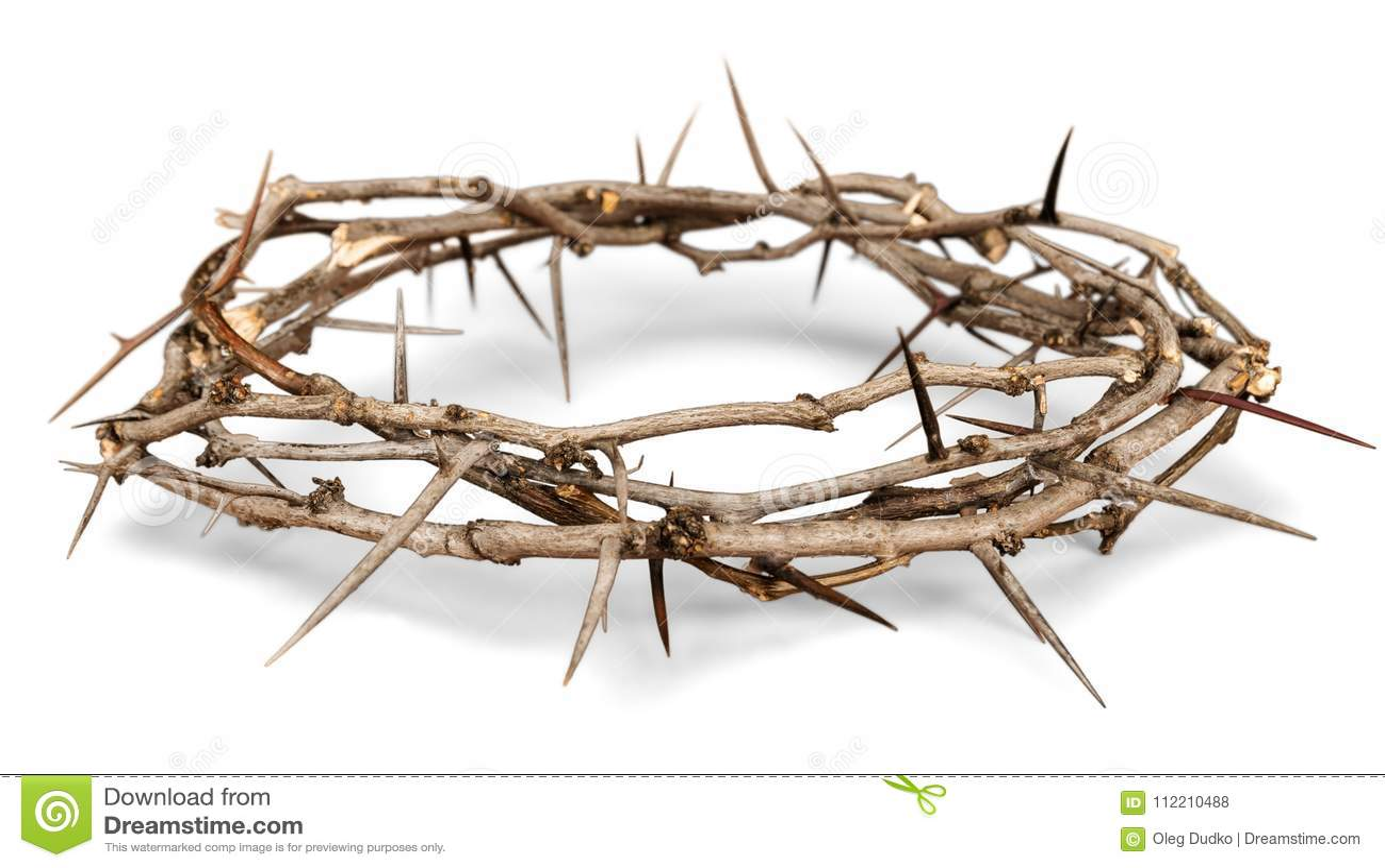 Coroa de espinhos