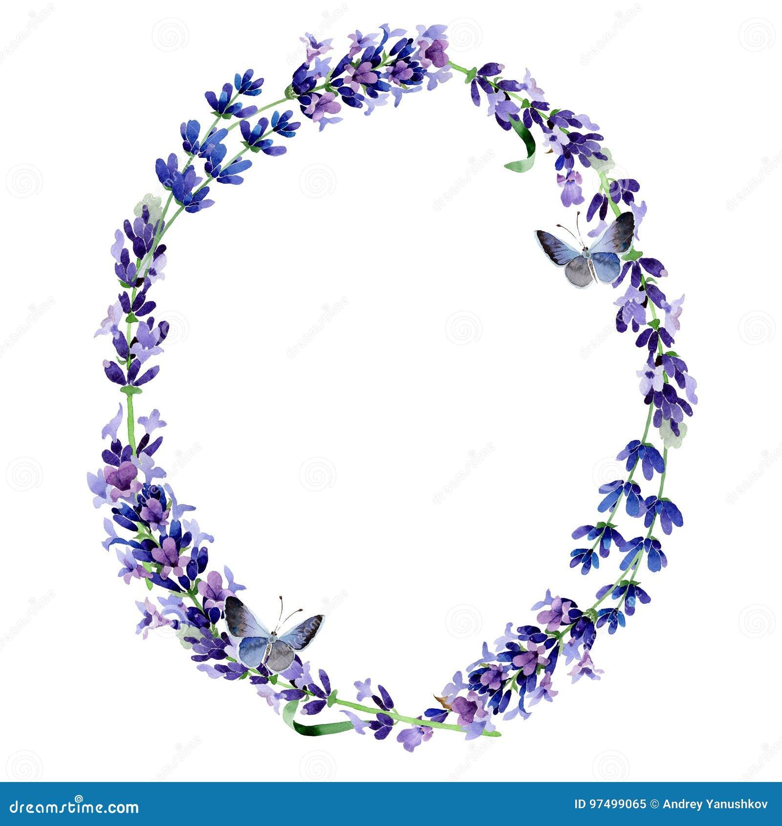 Corona del fiore della lavanda del Wildflower in uno stile dell acquerello