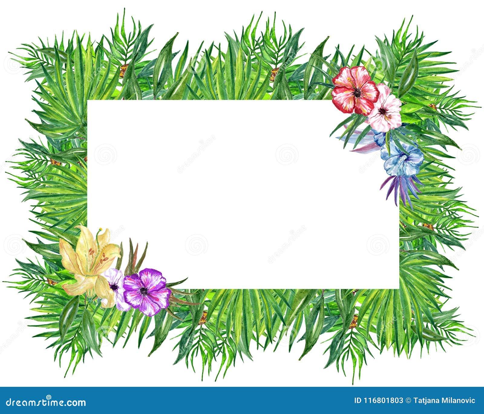 Corona tropicale delle foglie e dei fiori dell acquerello! Carta floreale esotica dell acquerello La struttura tropicale dipinta