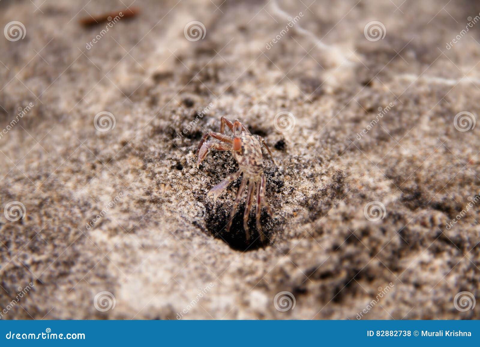Corp komt uit uit zand