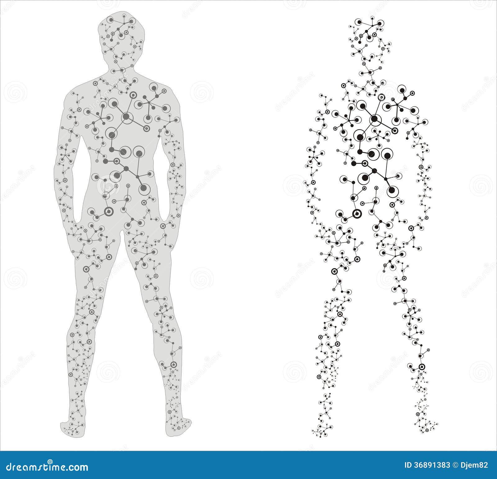 Download Corpo umano illustrazione di stock. Illustrazione di salute - 36891383