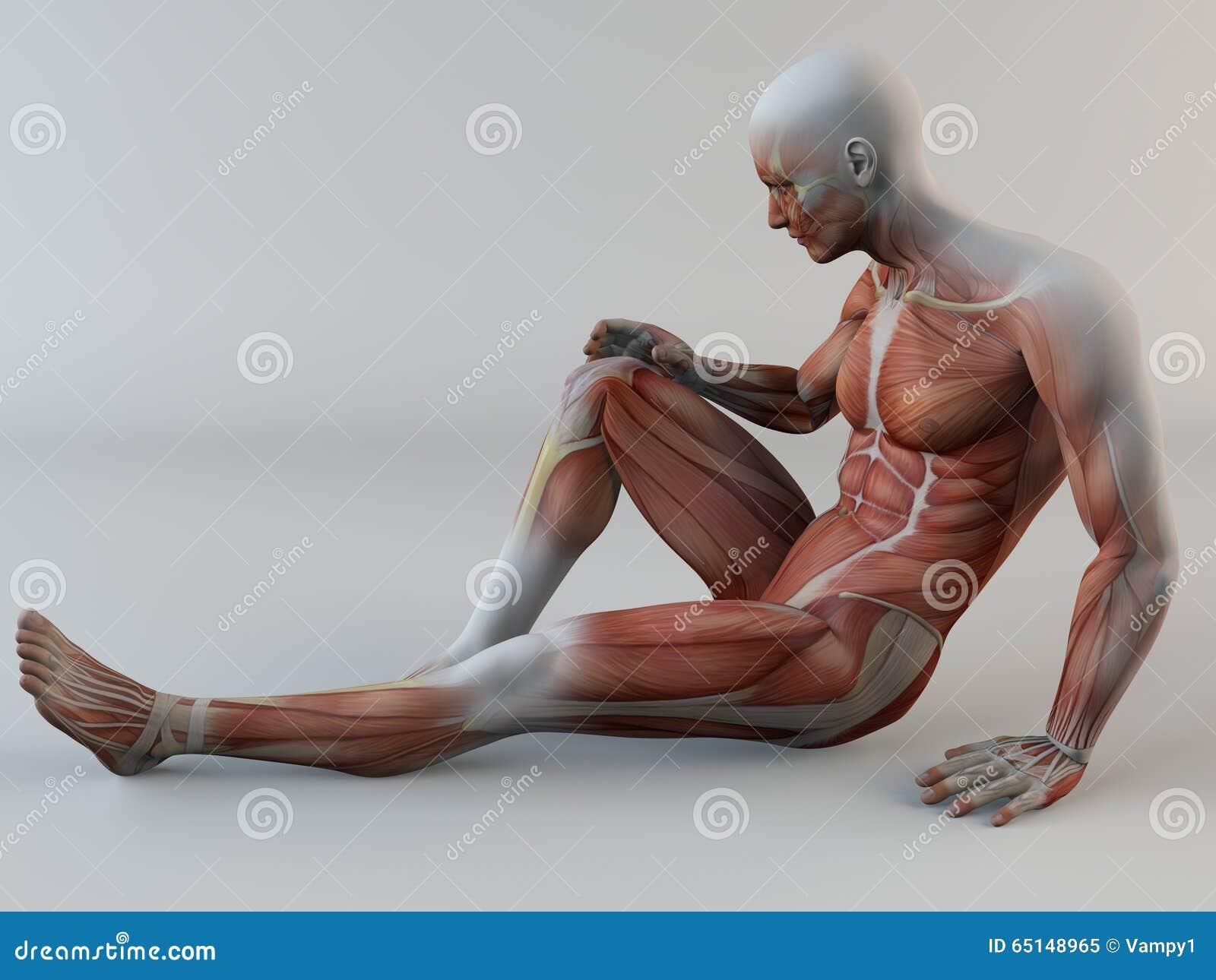 Corps humain, douleur de genou, muscles, larme de muscle