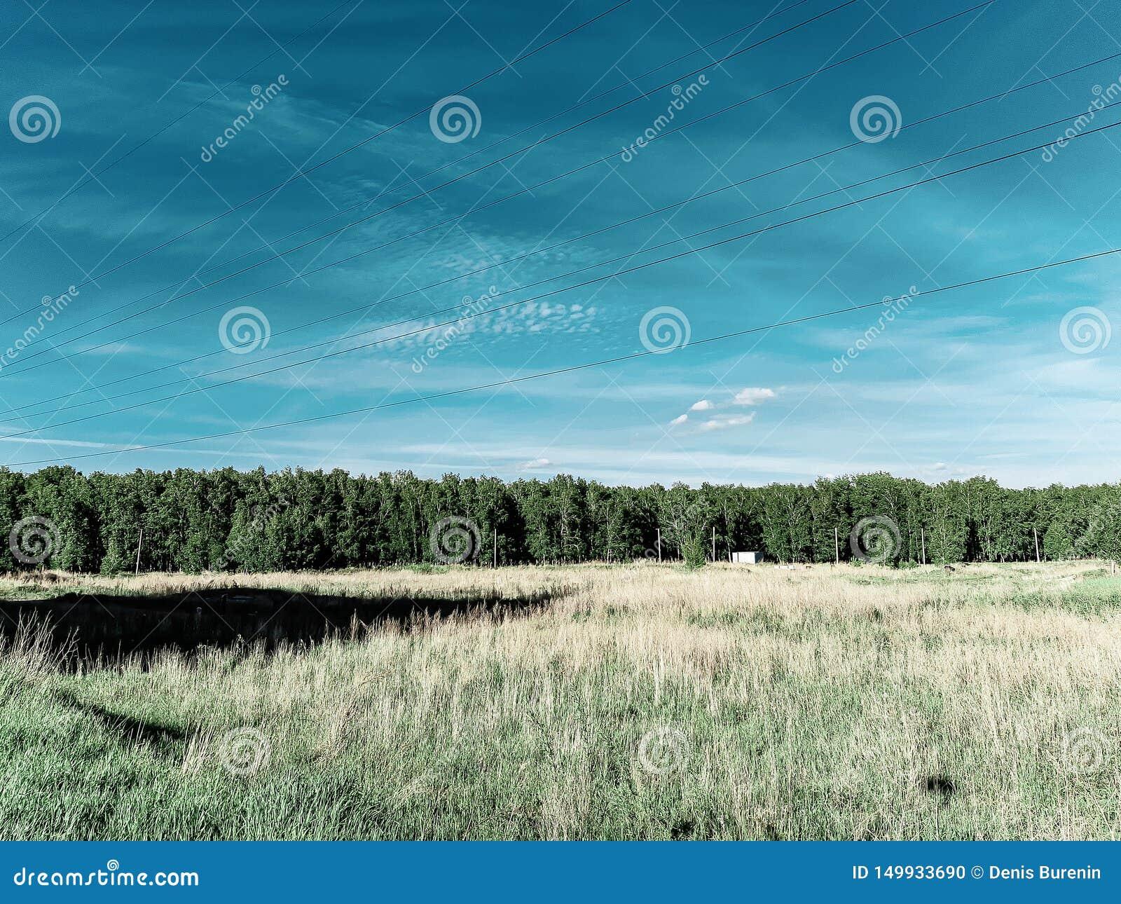 Correia da floresta, linha da floresta, opinião profunda de céu azul, campo, fios elétricos