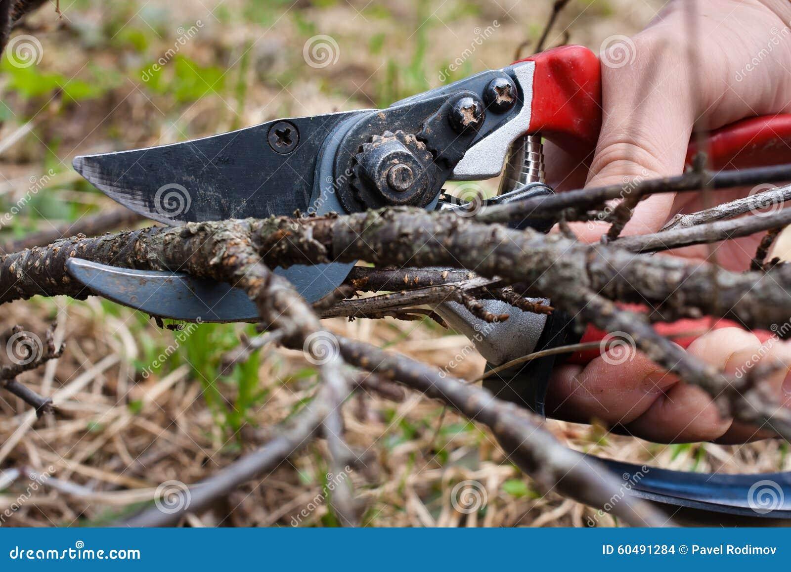 Corrente preta de poda pela tesoura de podar manual do jardim
