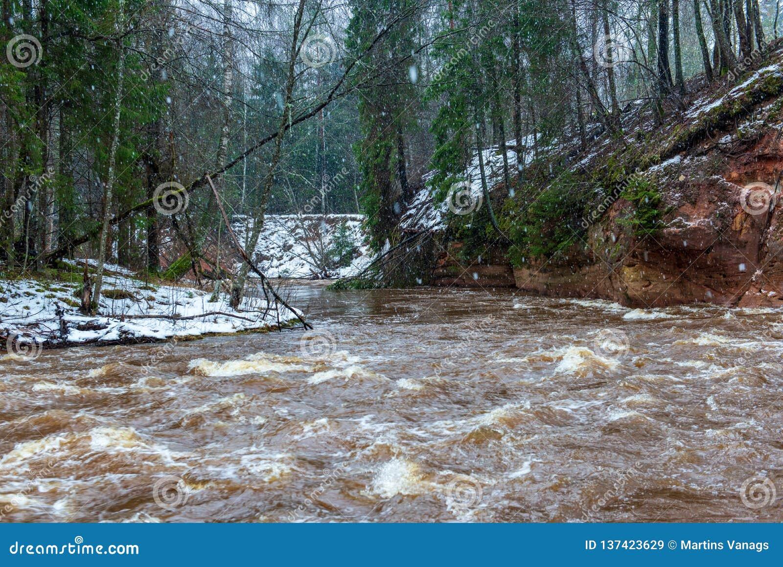 Corrente veloce del fiume nella foresta bianca di inverno