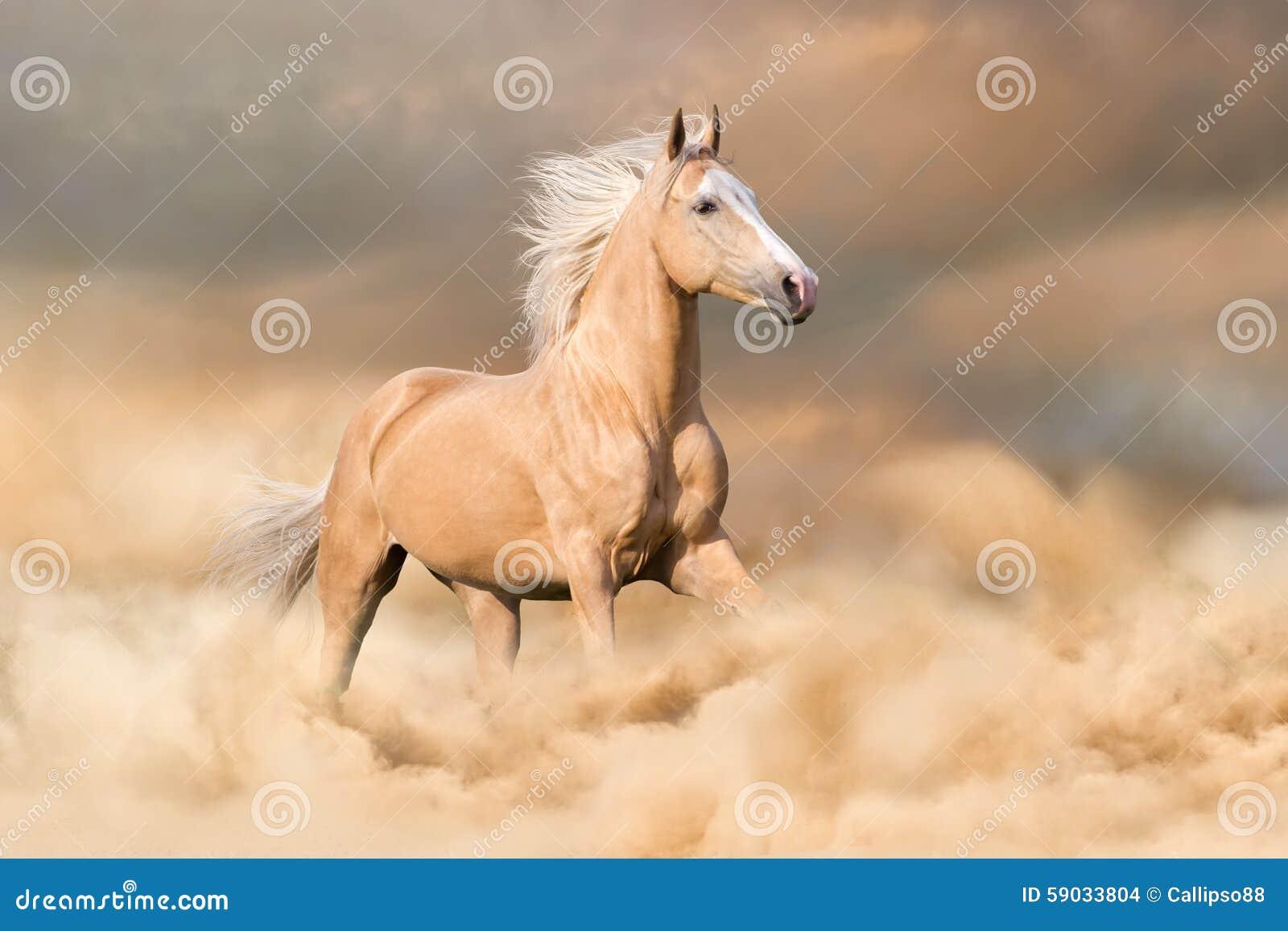 Corrida do cavalo