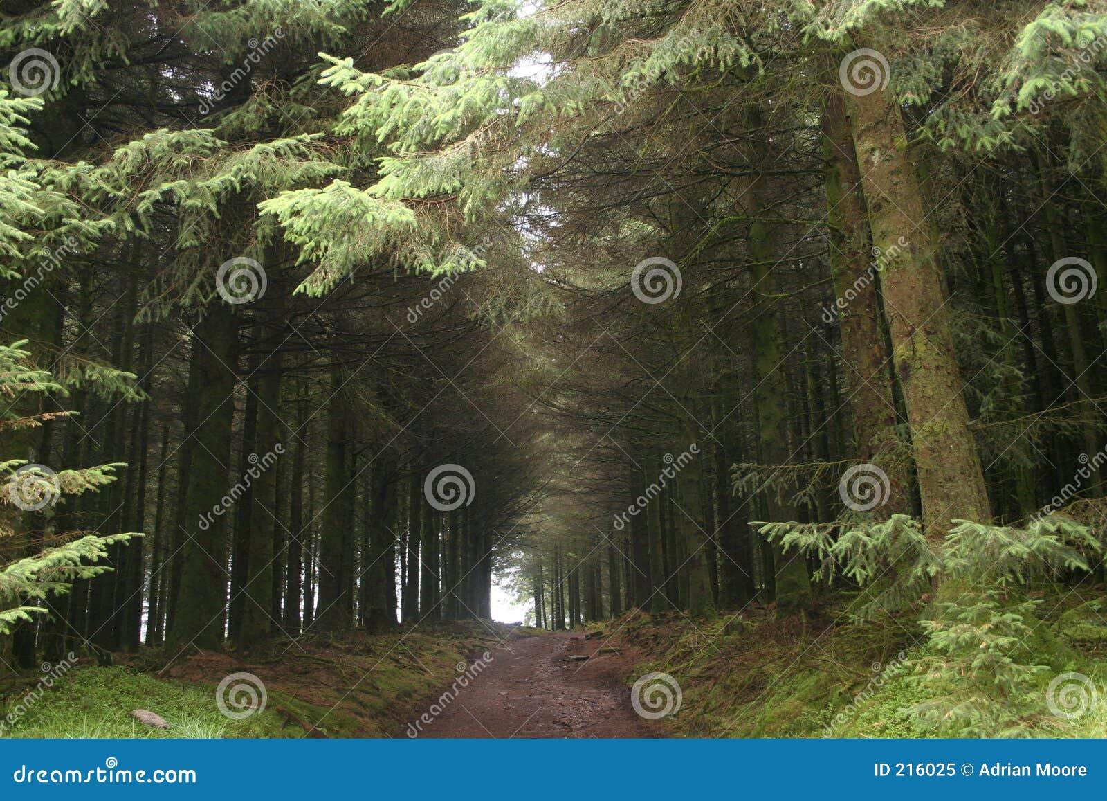 Corridoio degli alberi