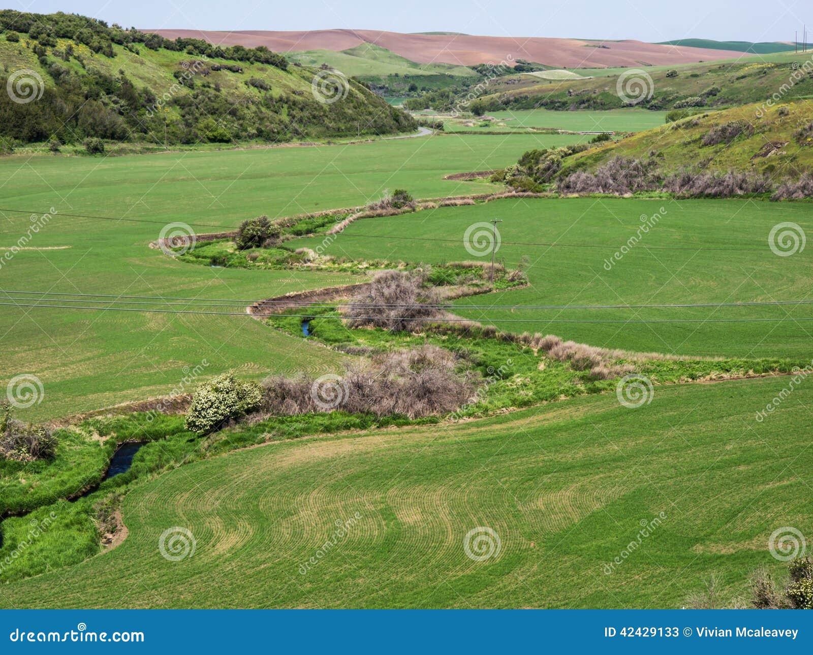 Corriente de serpenteo a través de campos de trigo en primavera