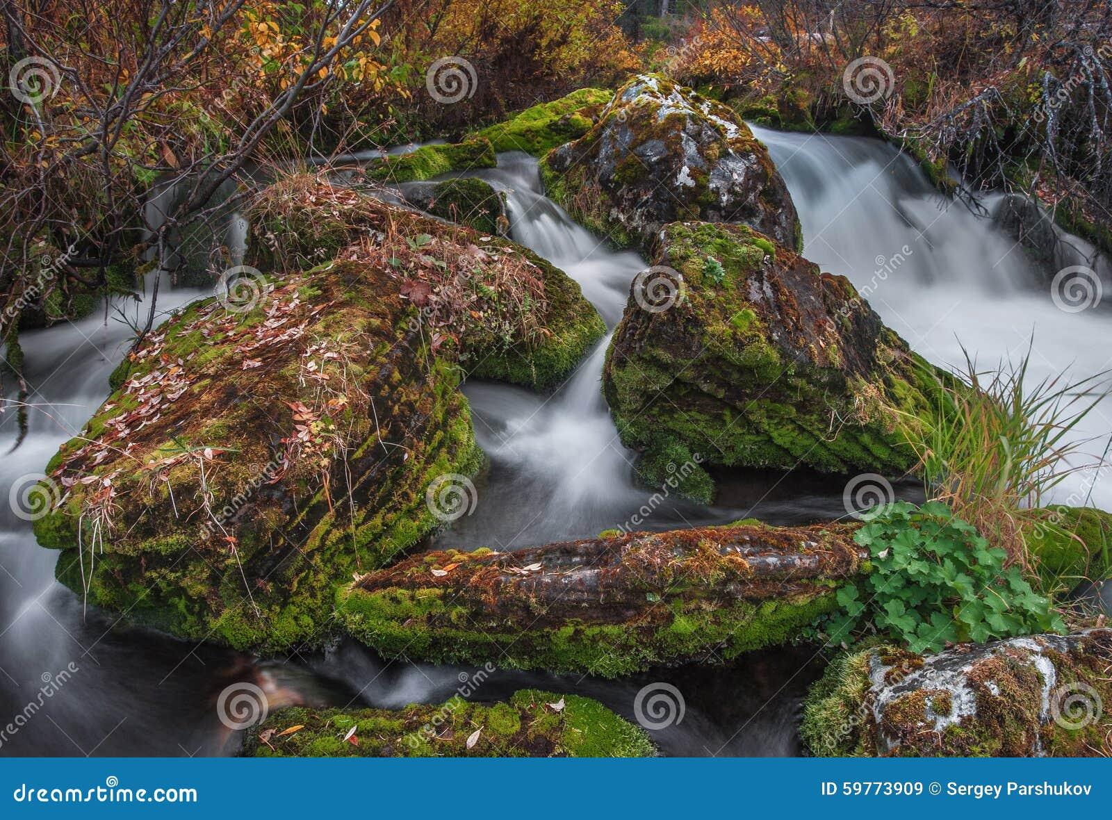 Corriente rápida y hojas caidas en las rocas