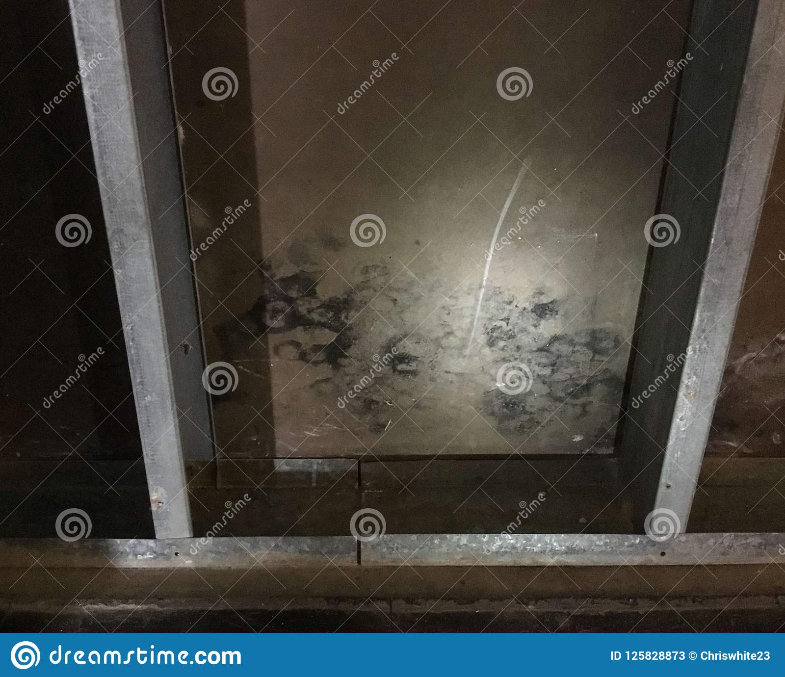 Corroded Steel Studs And Mold On Sheathing Stock Image