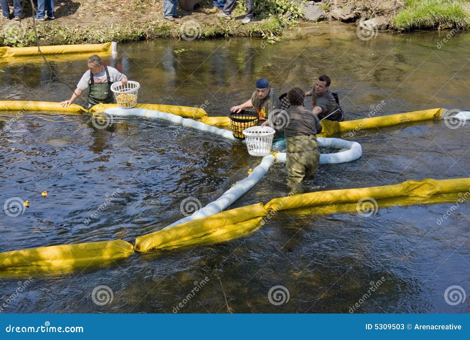 Download Corsa Dell'anatra Di Forestville Fotografia Stock Editoriale - Immagine di ammucchiato, rivestimento: 5309503