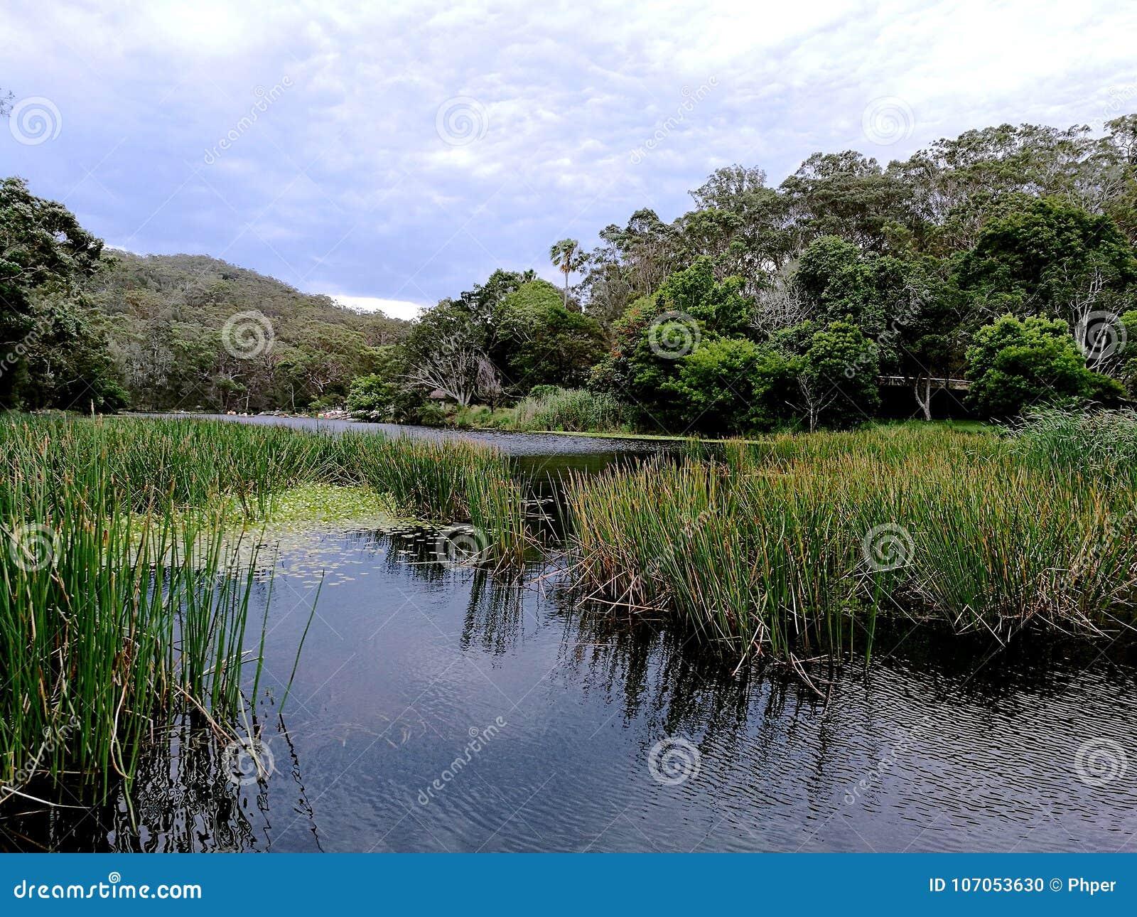 Cortar el parque nacional real del río @, Sydney