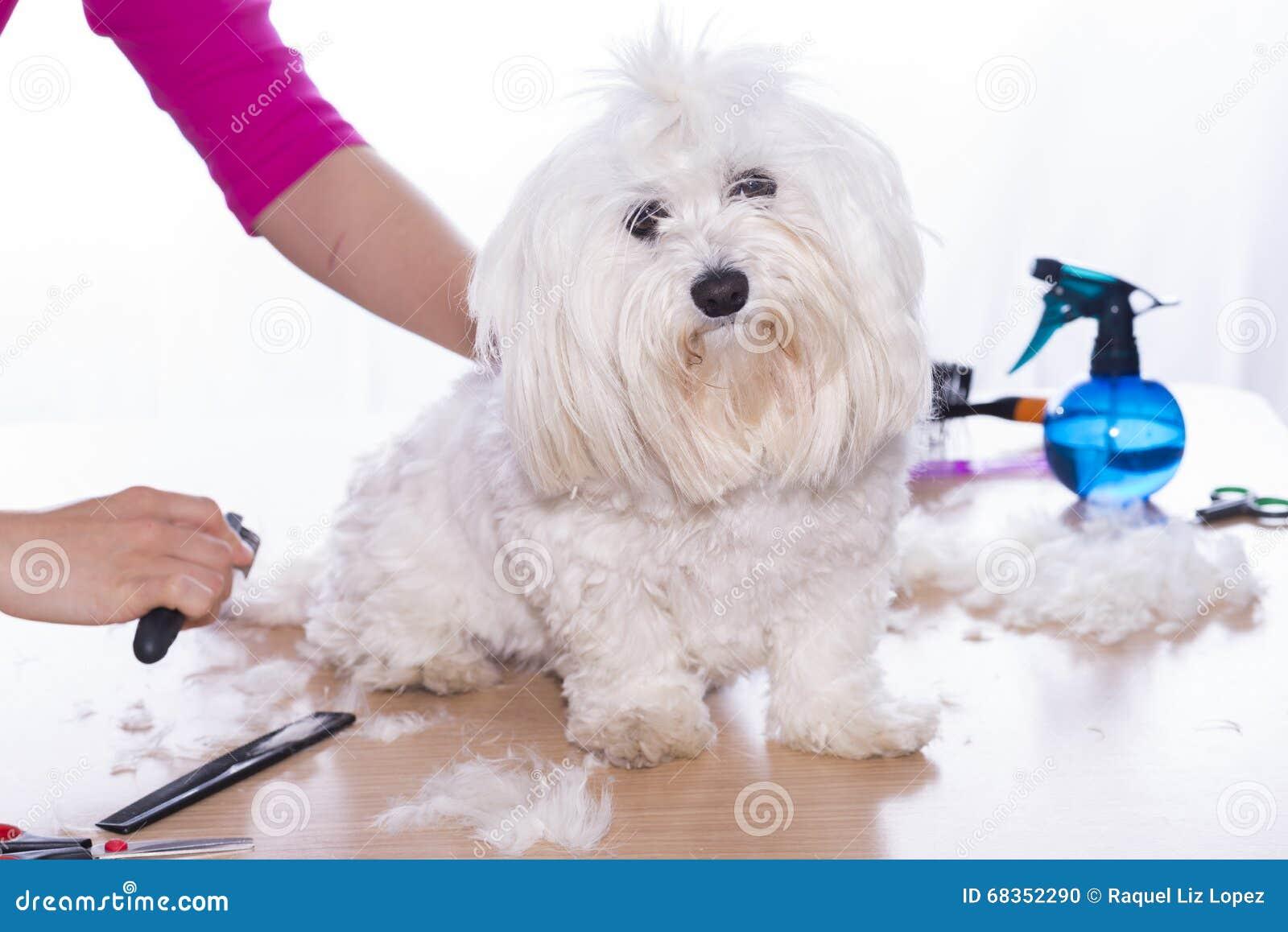Corte canino do cabelo