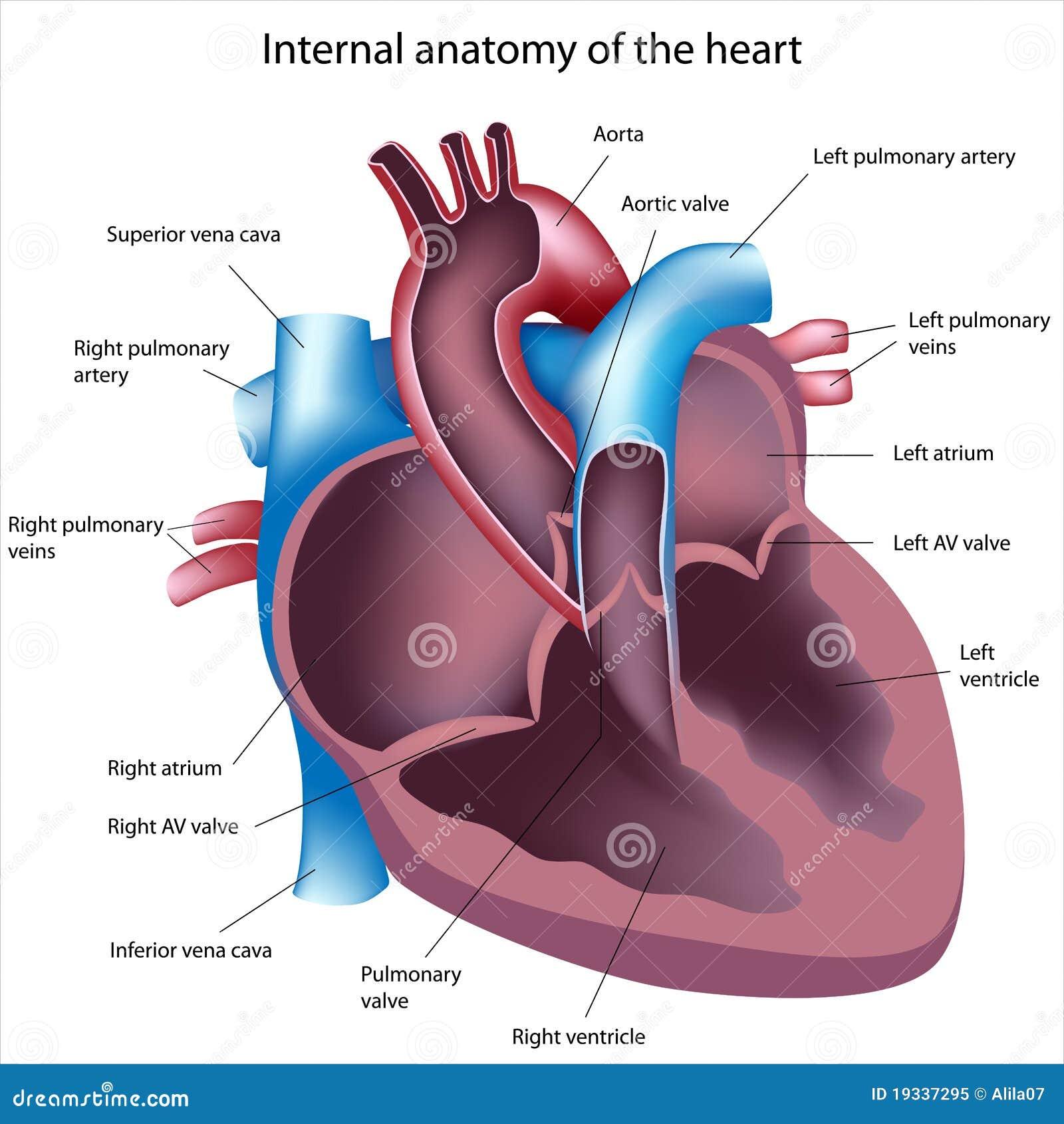 Corte del corazón ilustración del vector. Ilustración de heartbeat ...