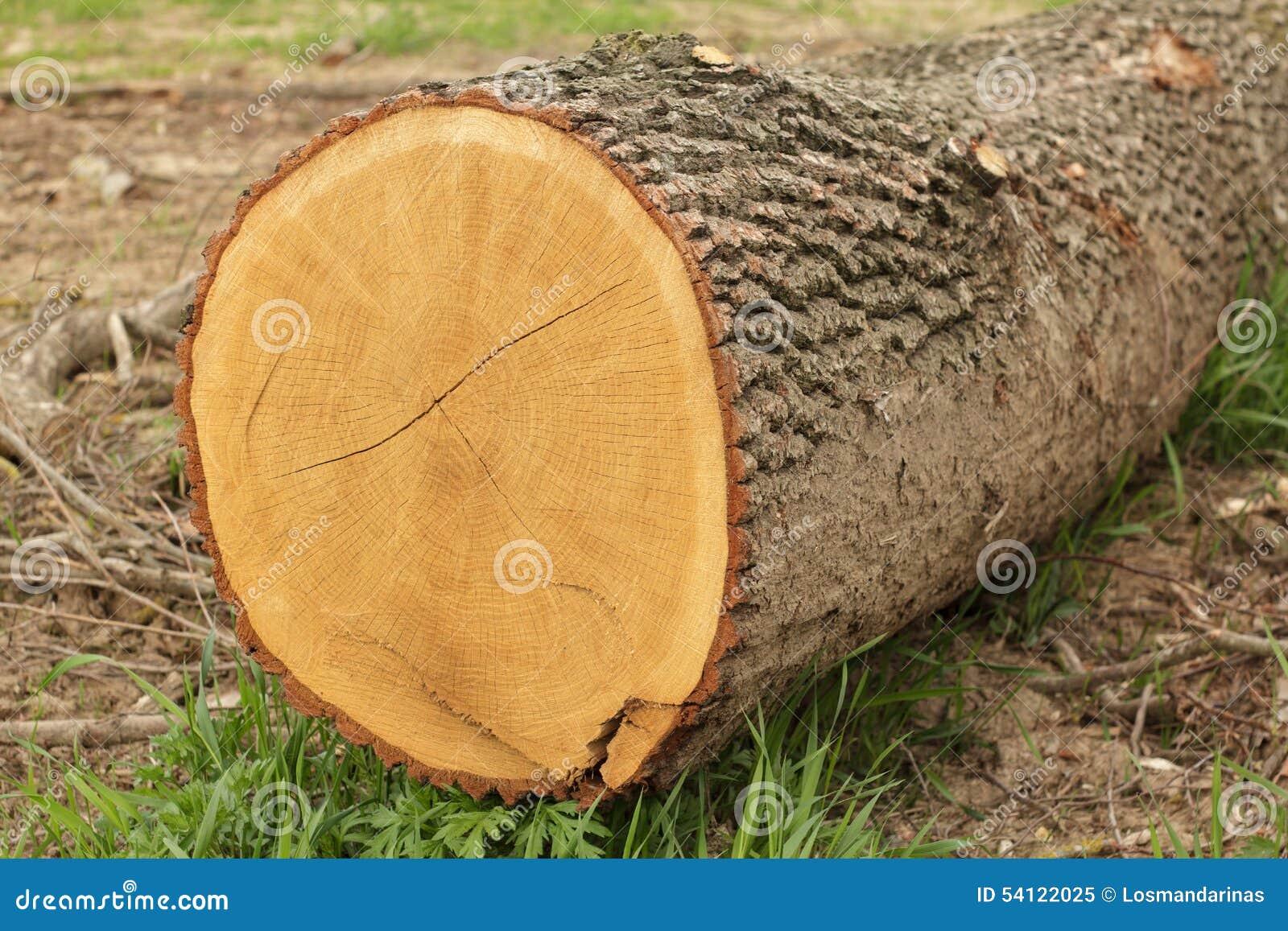 Corte del extremo de un árbol
