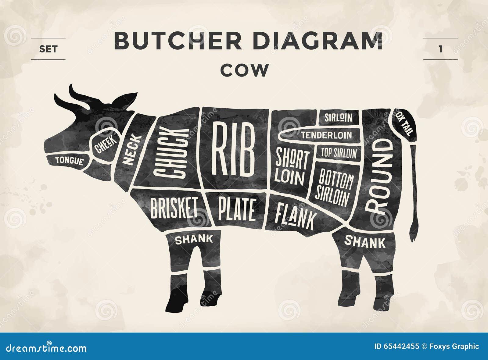 Corte do grupo da carne Diagrama do carniceiro do cartaz - vaca Desenhado à mão tipográfico do vintage Ilustração do vetor