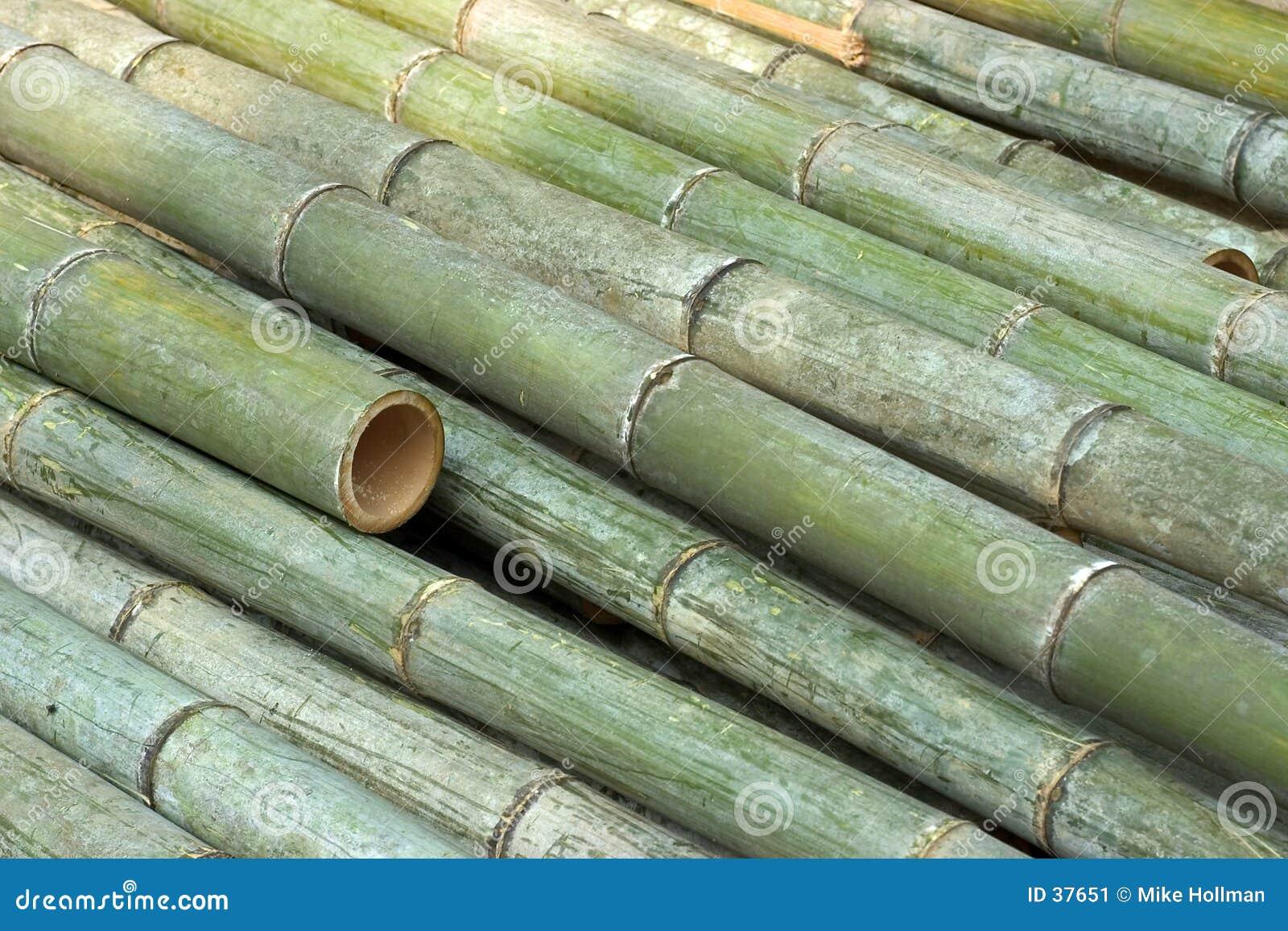 Corte o bambu