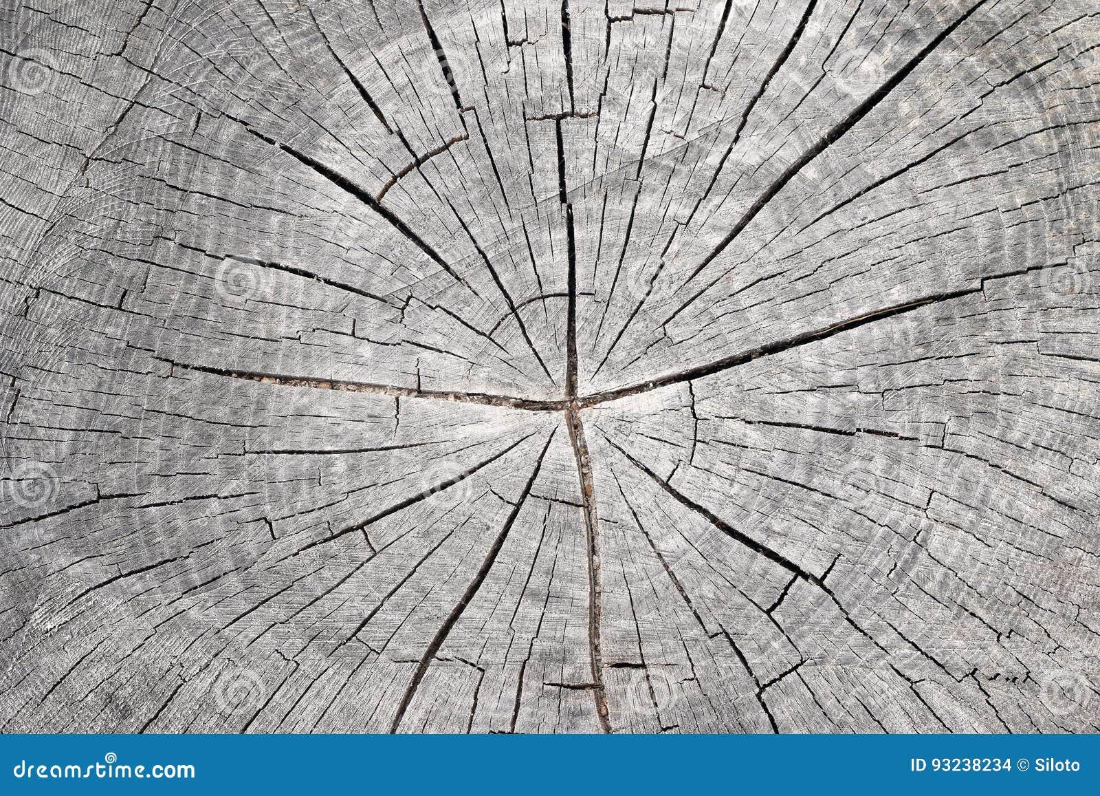 Corte o tronco de árvore - anéis anulares