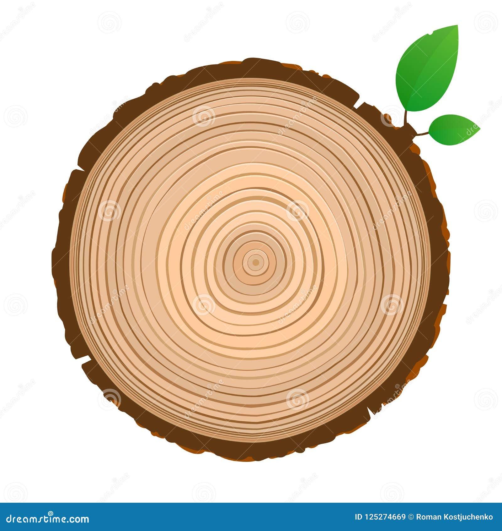 Corte transversal de madera del icono de la muestra del tronco con los anillos de árbol