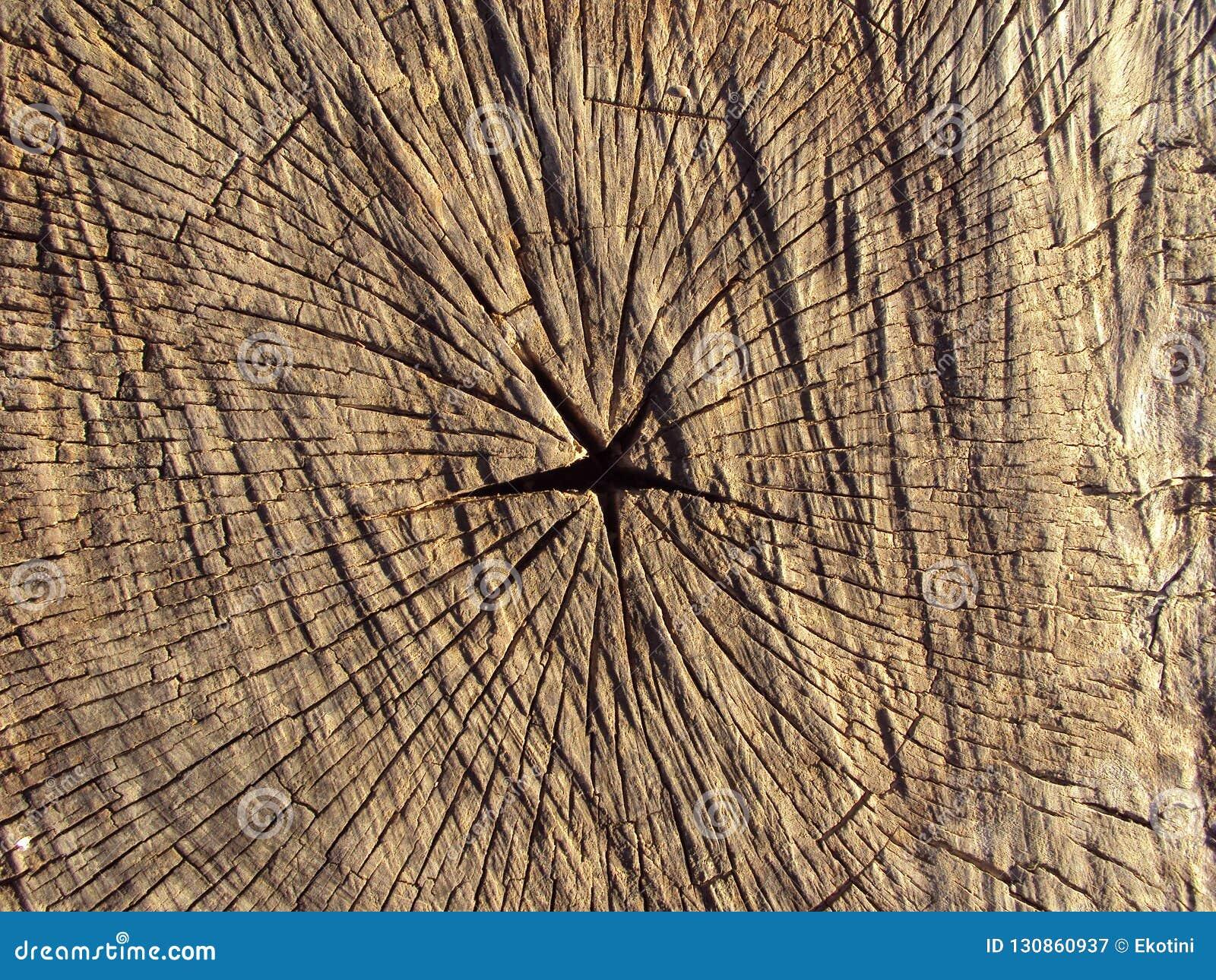 Corte transversal de un árbol