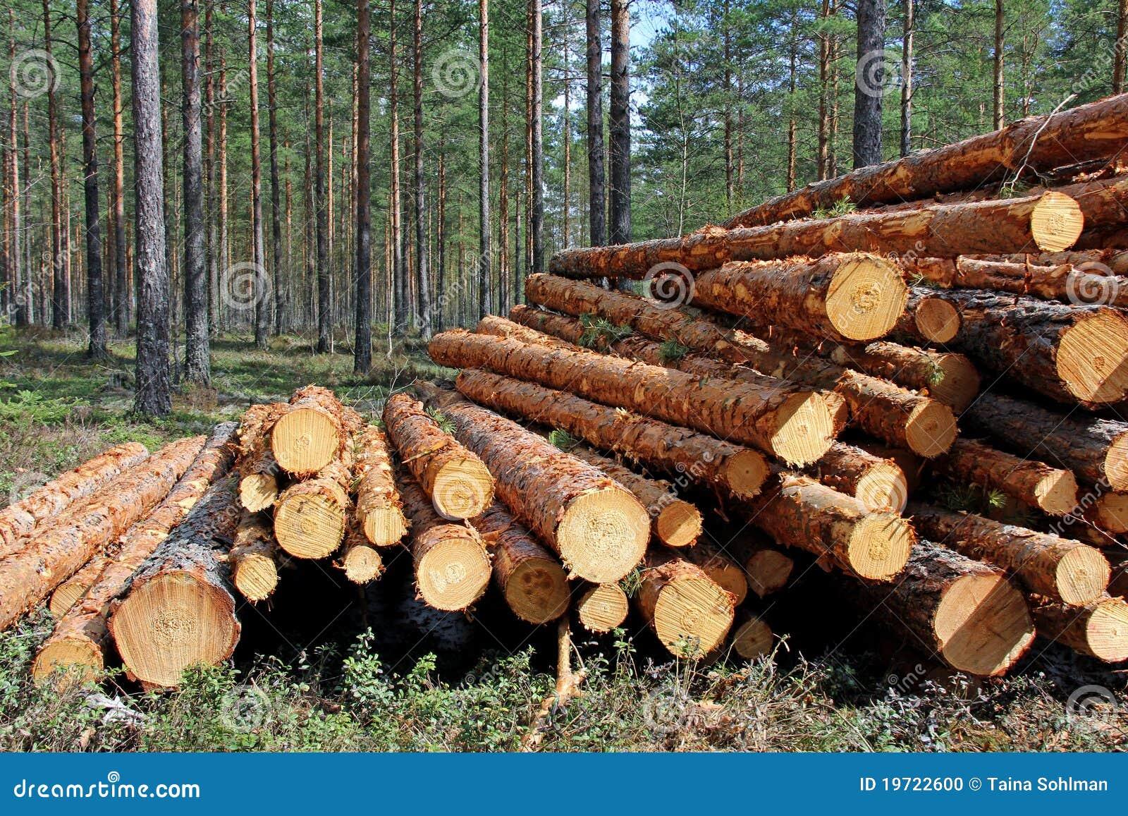 Corte y empil la madera del pino en bosque foto de - Maderas del pino ...