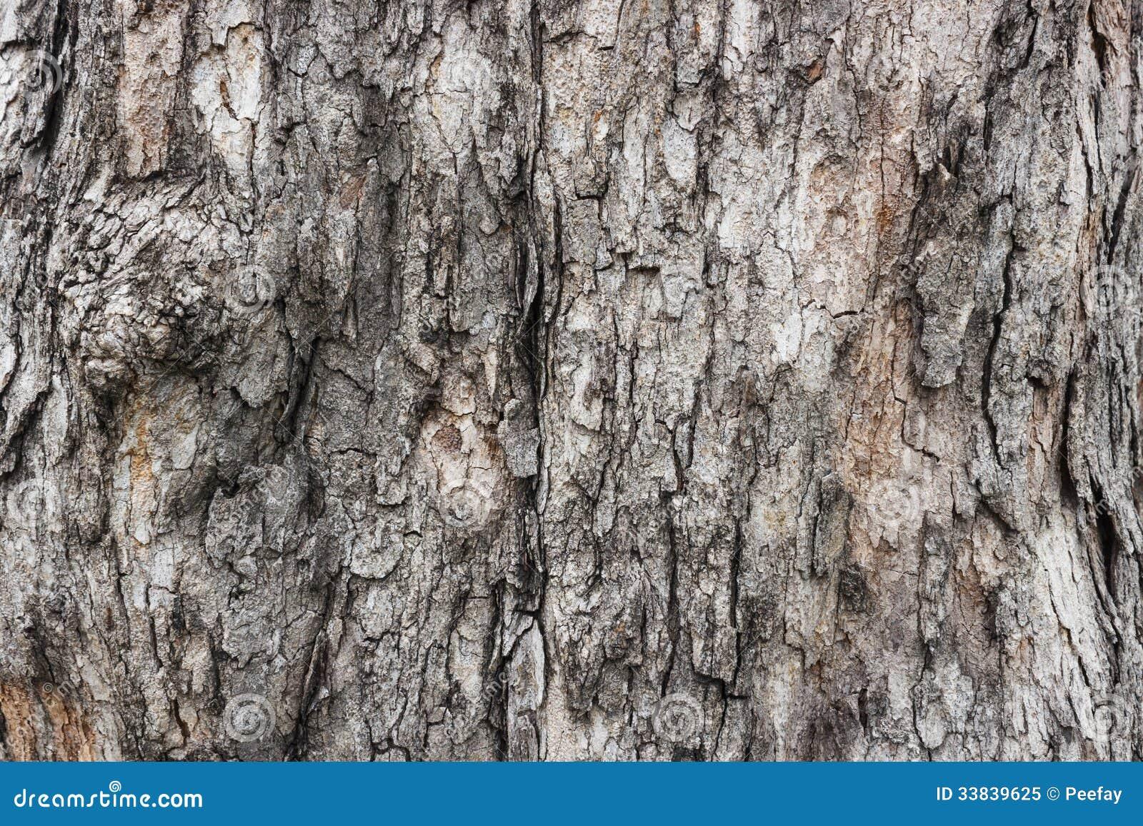 Corteccia di albero