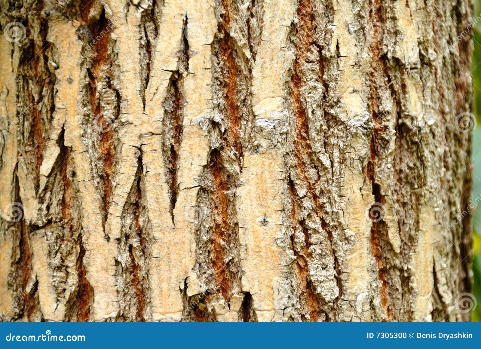 Download Corteccia di albero fotografia stock. Immagine di pianta - 7305300
