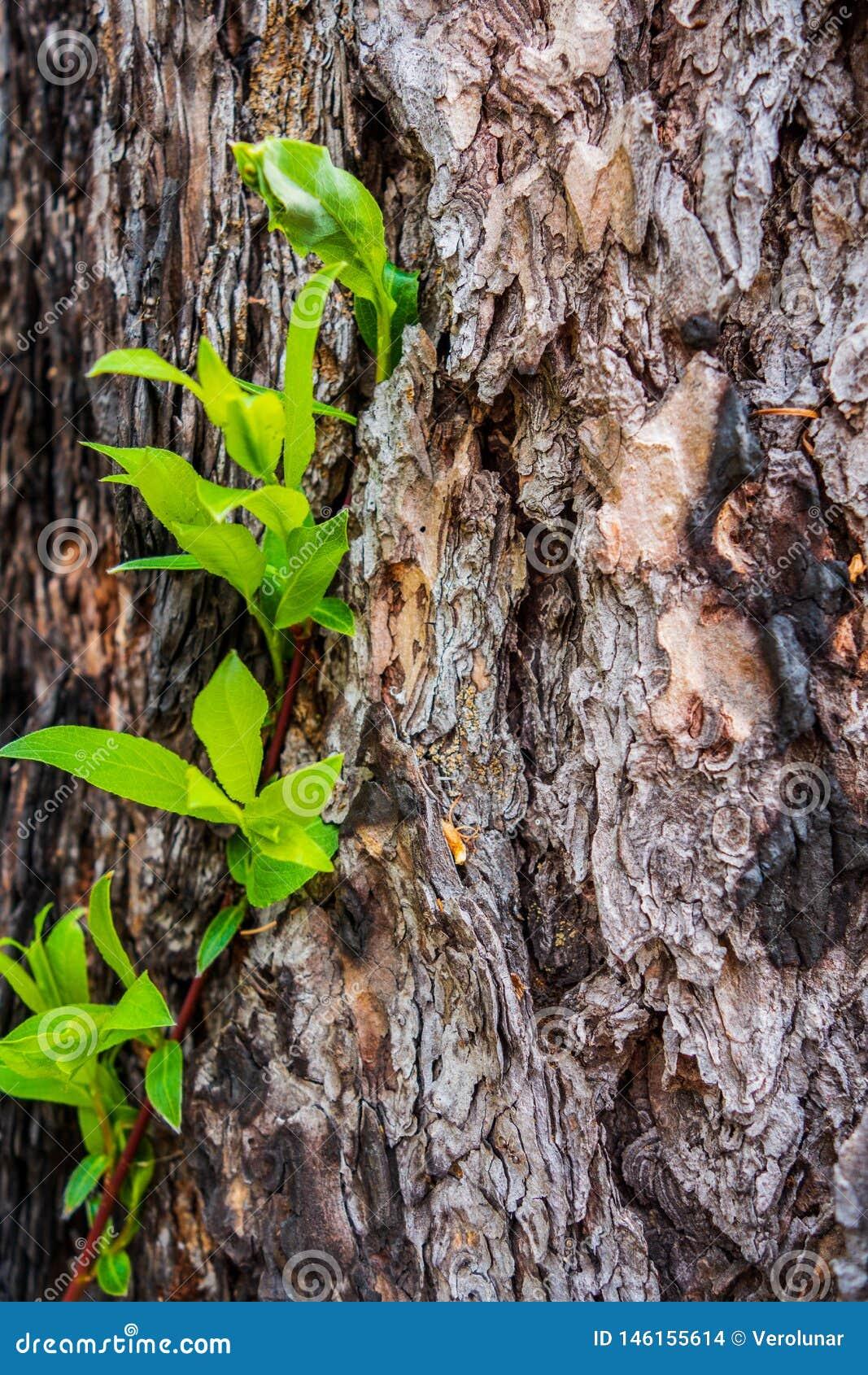 Corteccia di albero con le foglie verdi