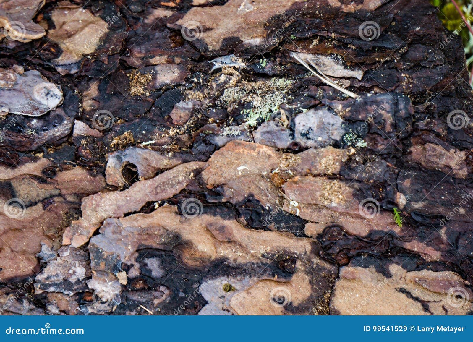 Corteccia di albero decomposta - 2