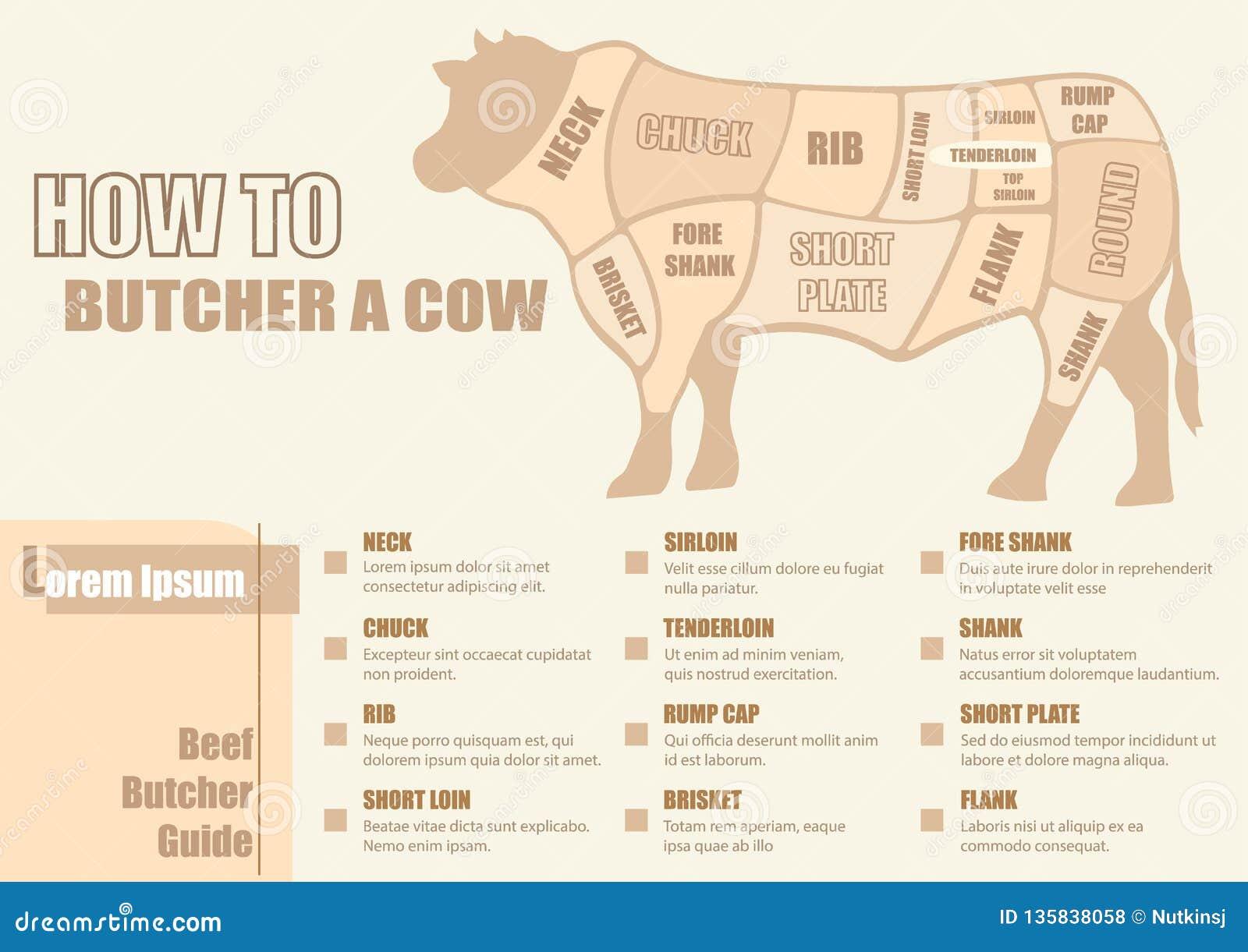 Cortes del diagrama de la carne de vaca