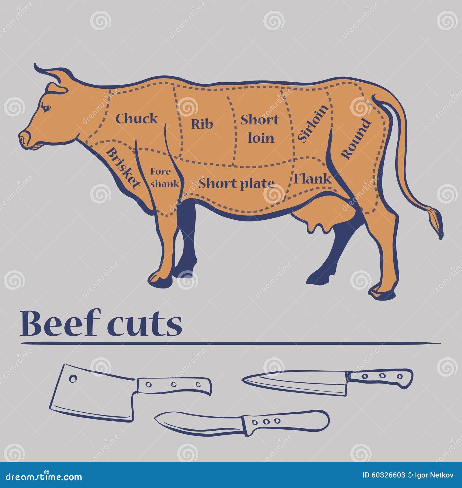 Cortes do vetor da vaca