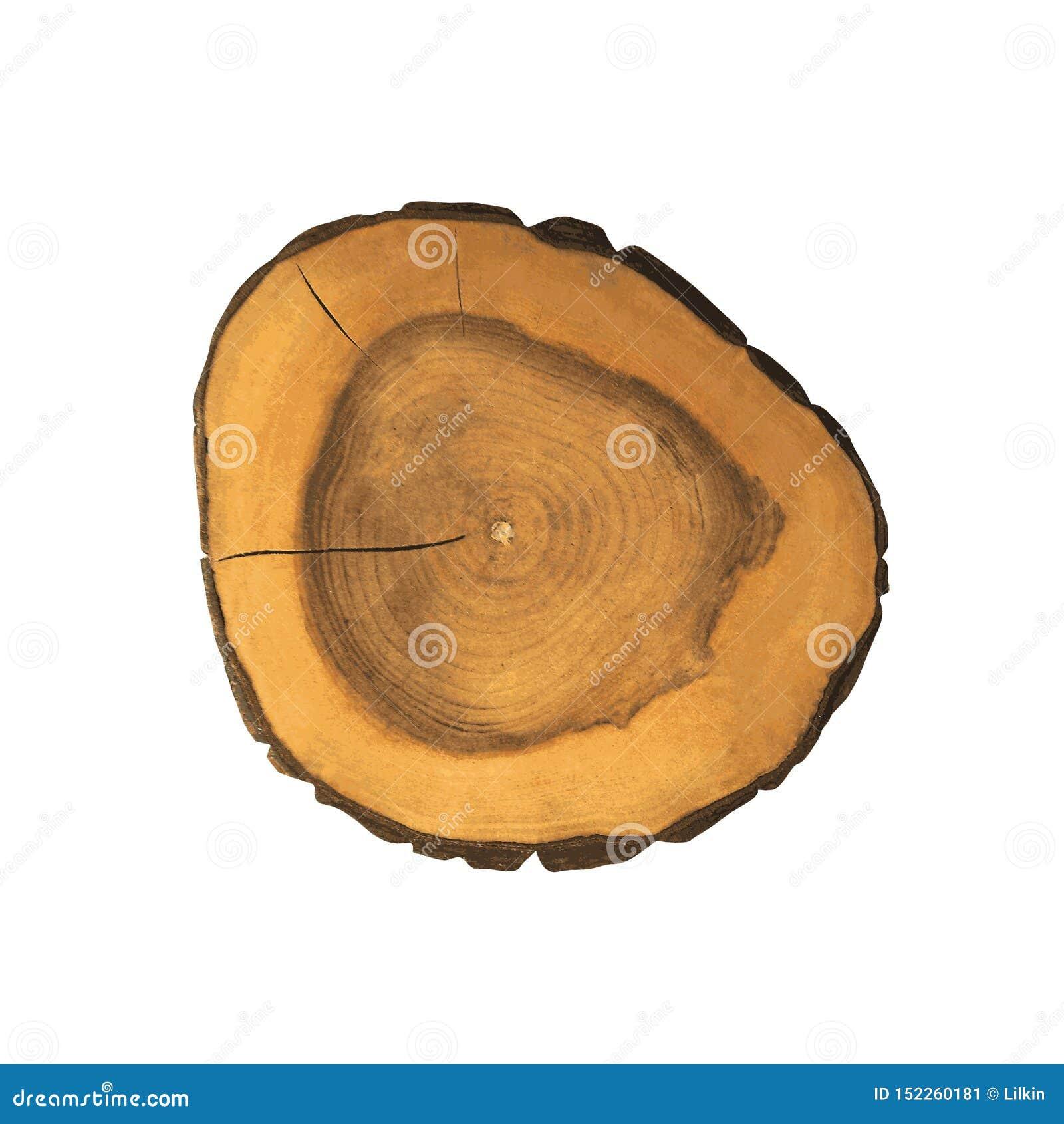 Cortes transversales del tocón de árbol