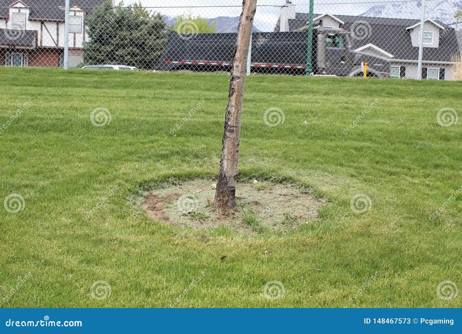 Corteza de árbol con cercado semi