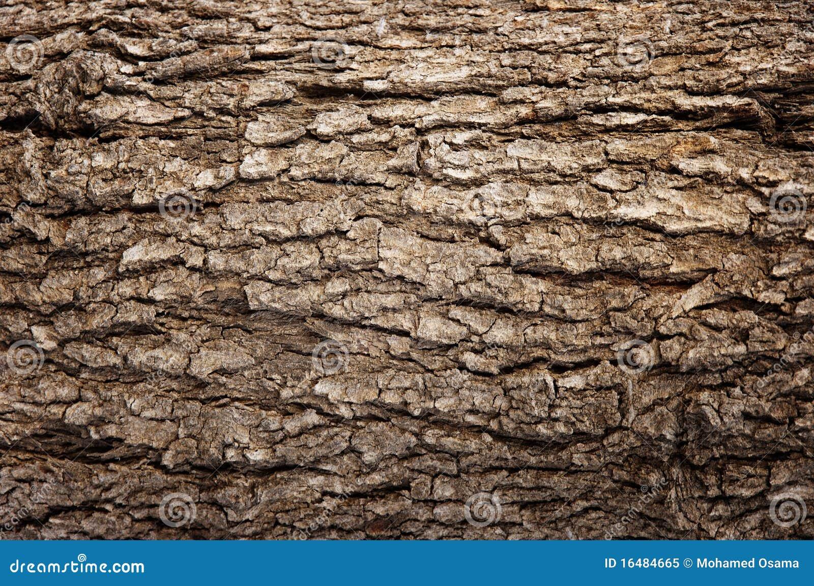 Corteza de madera abstracta de la textura