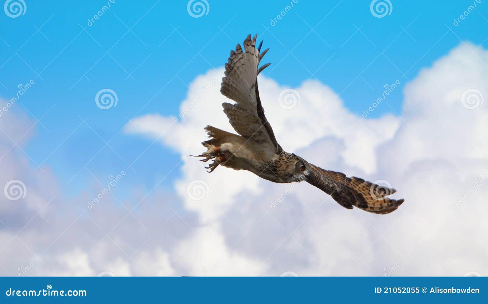 Coruja de águia de Turkmenian