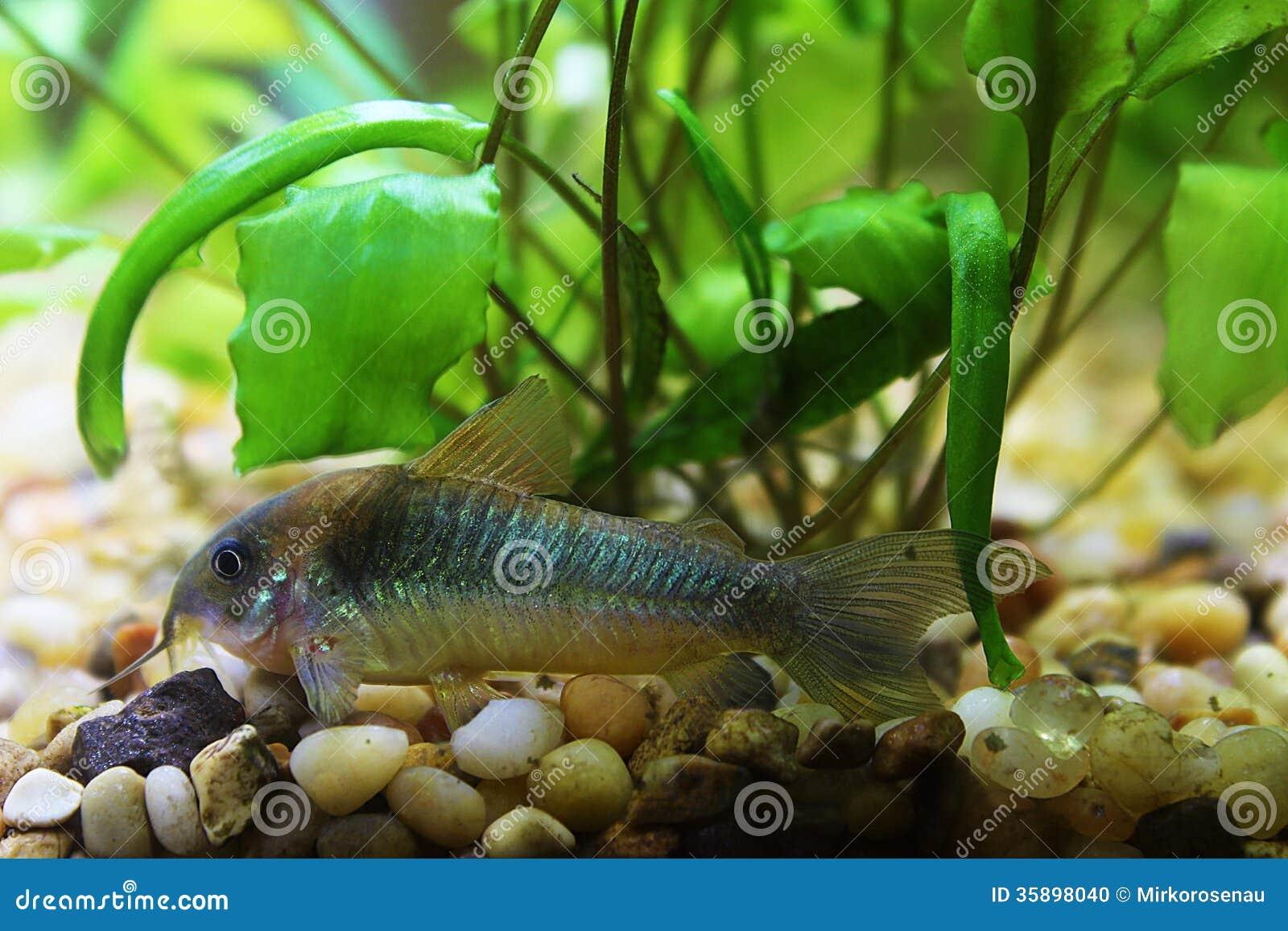 Catfish tank catfish tank farming 2017 fish tank for Cat proof fish tank